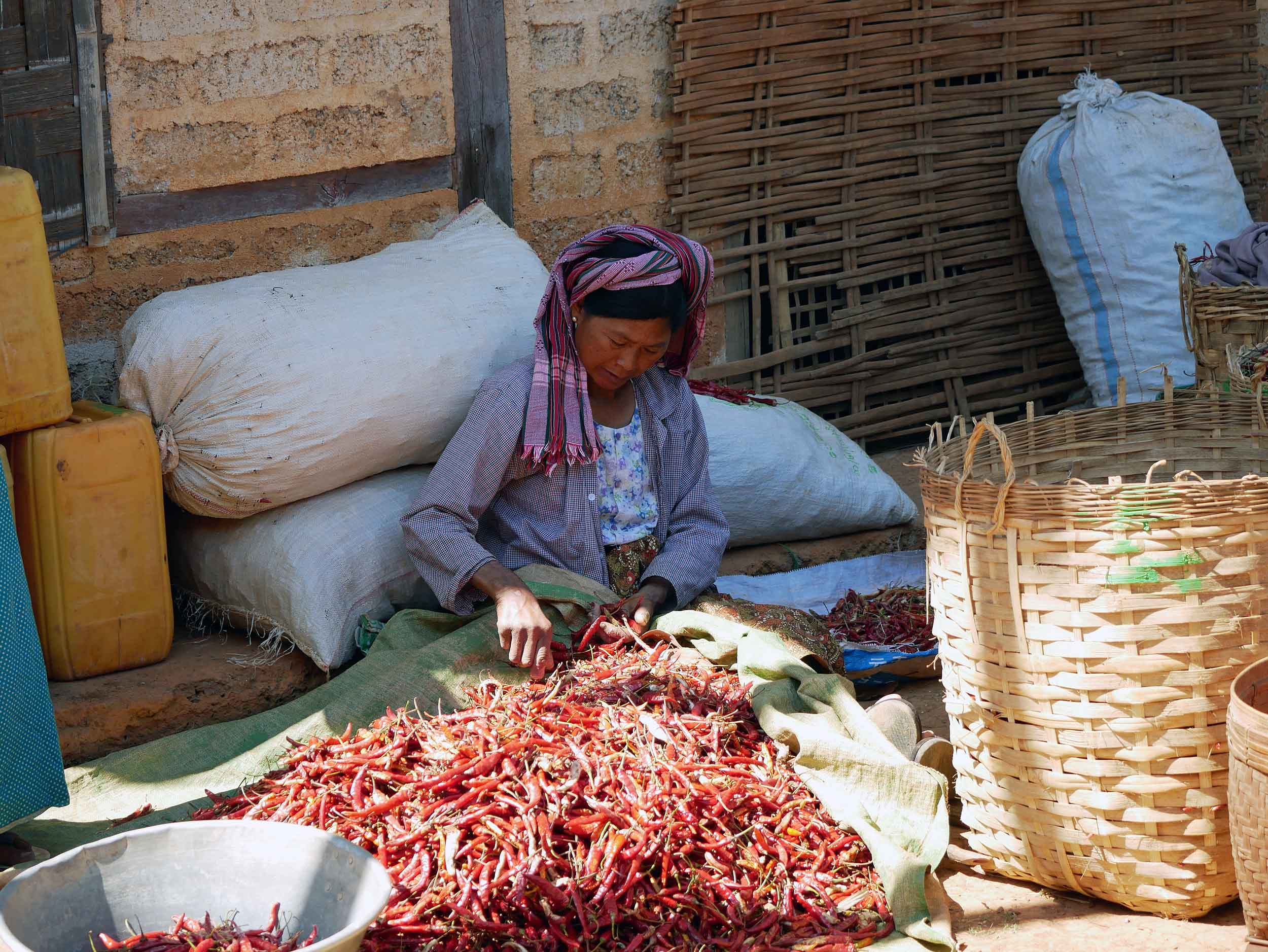 As we ate lunch in Kone-hla village, women sorted red chiles for market (Feb 20).