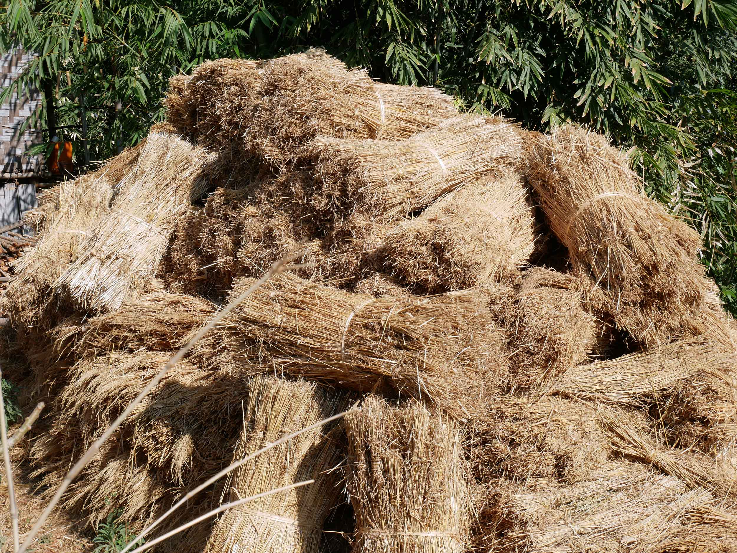 Along the way, we often saw piles of wheat, used to supplement the diets of livestock during the dry season (Feb 21).
