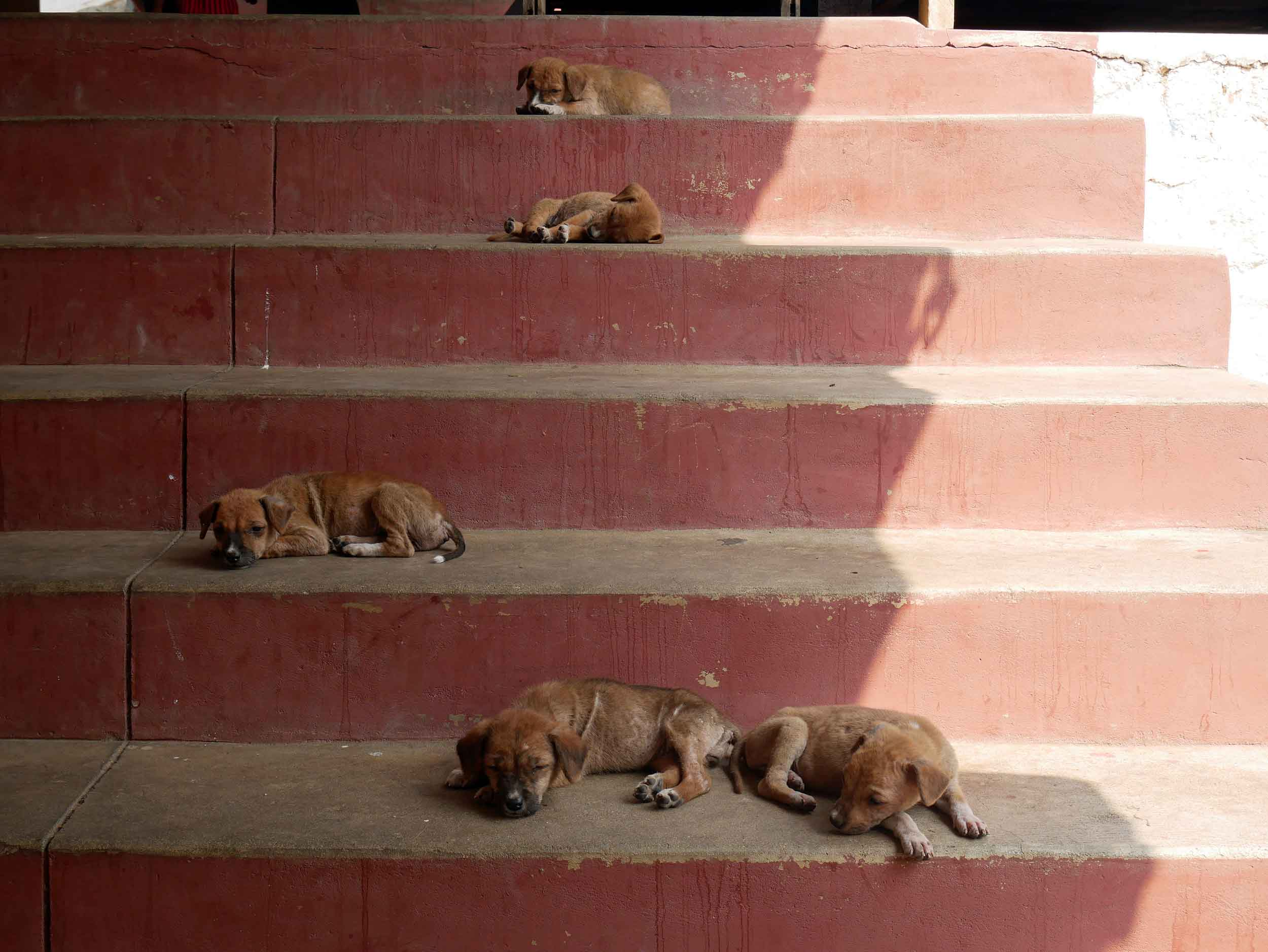 Many surprises and interesting moments lay in-store as you climb upwards, including these drowsy puppies (Feb 18).