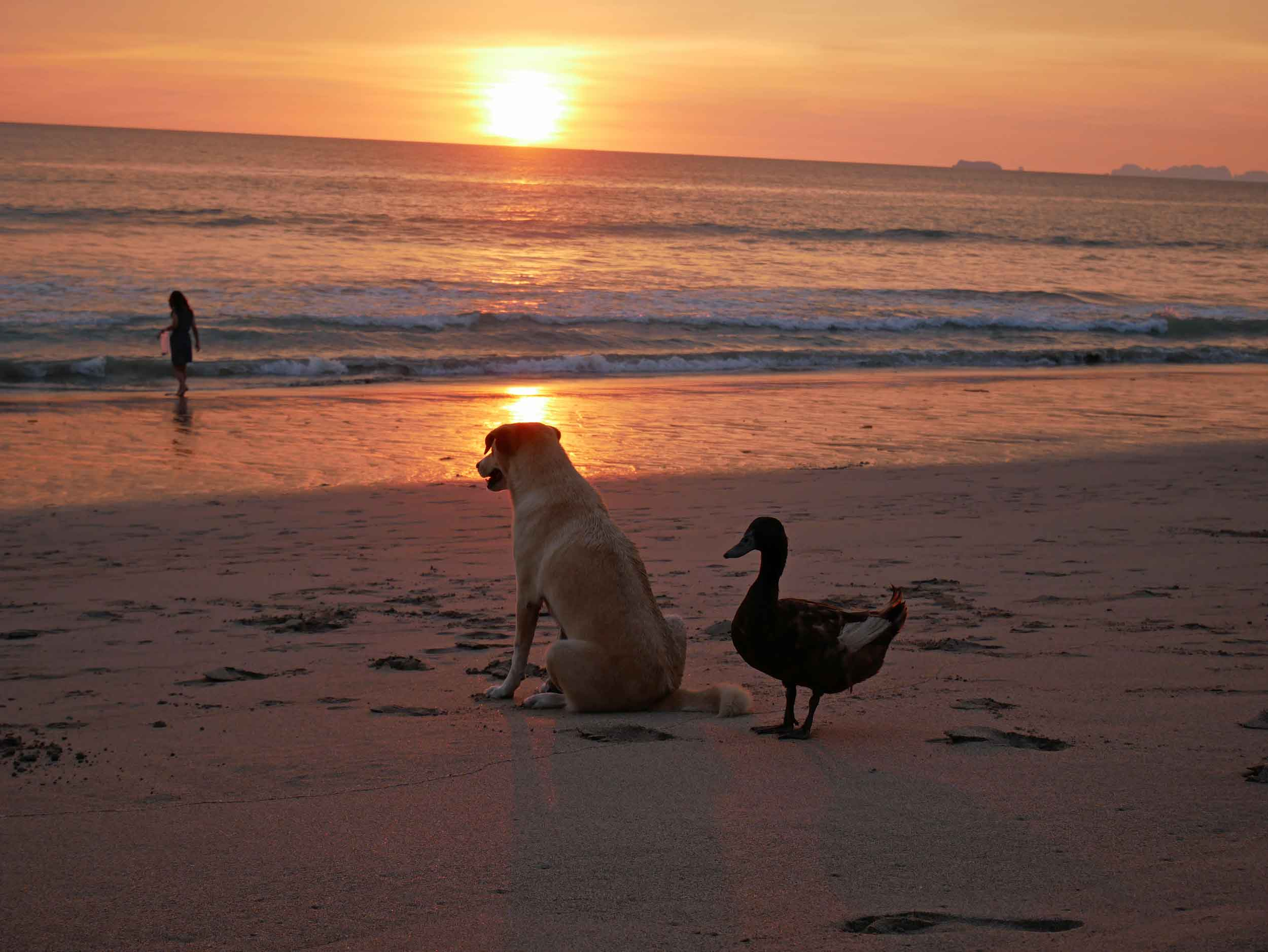 We couldn't stop giggling about the friendship between these two, who walked down the beach together and always stayed close.