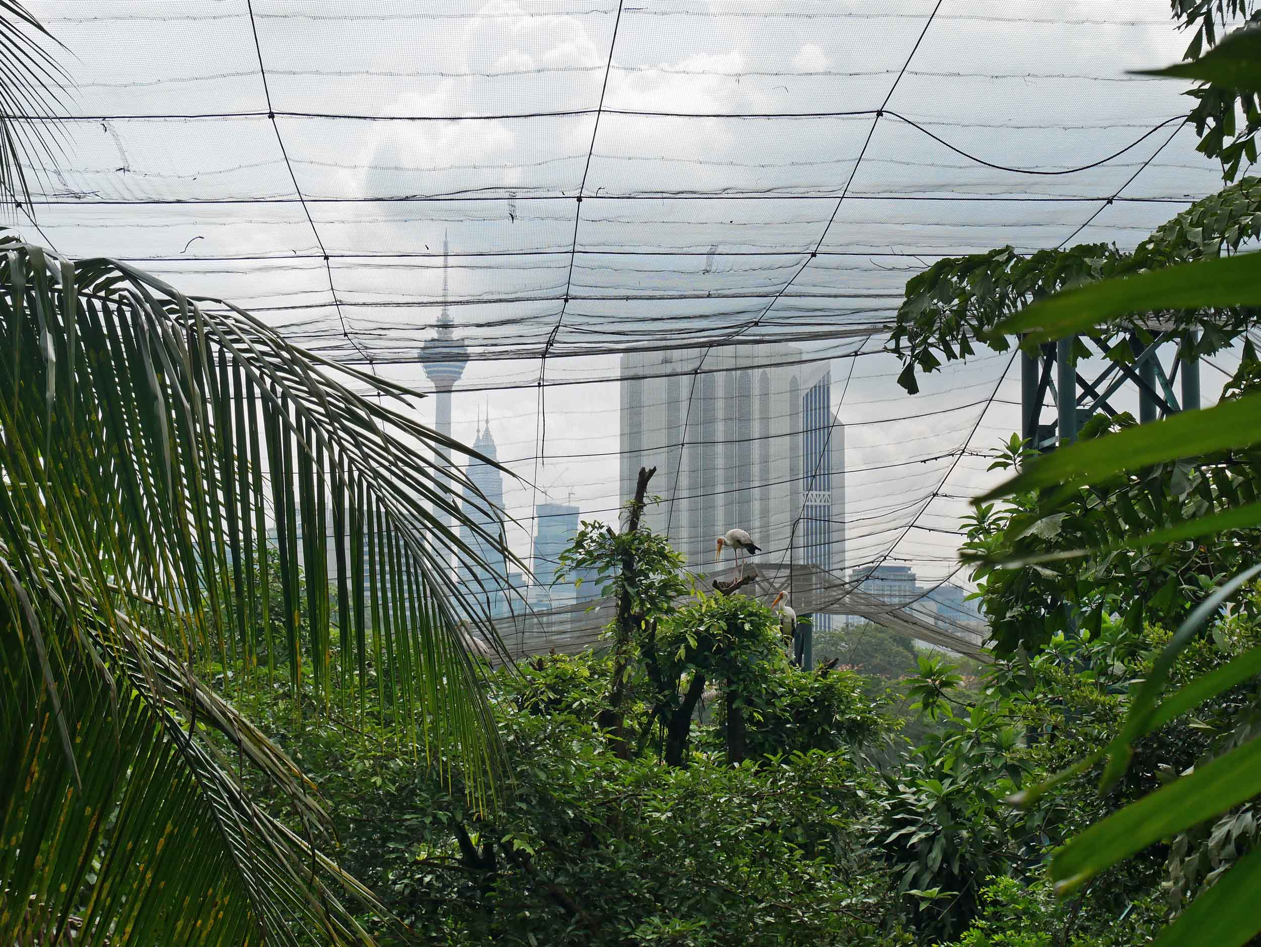 In the Bird Park, most all feathered creatures roam free, protected by a netted canopy with the KL skyline as backdrop.