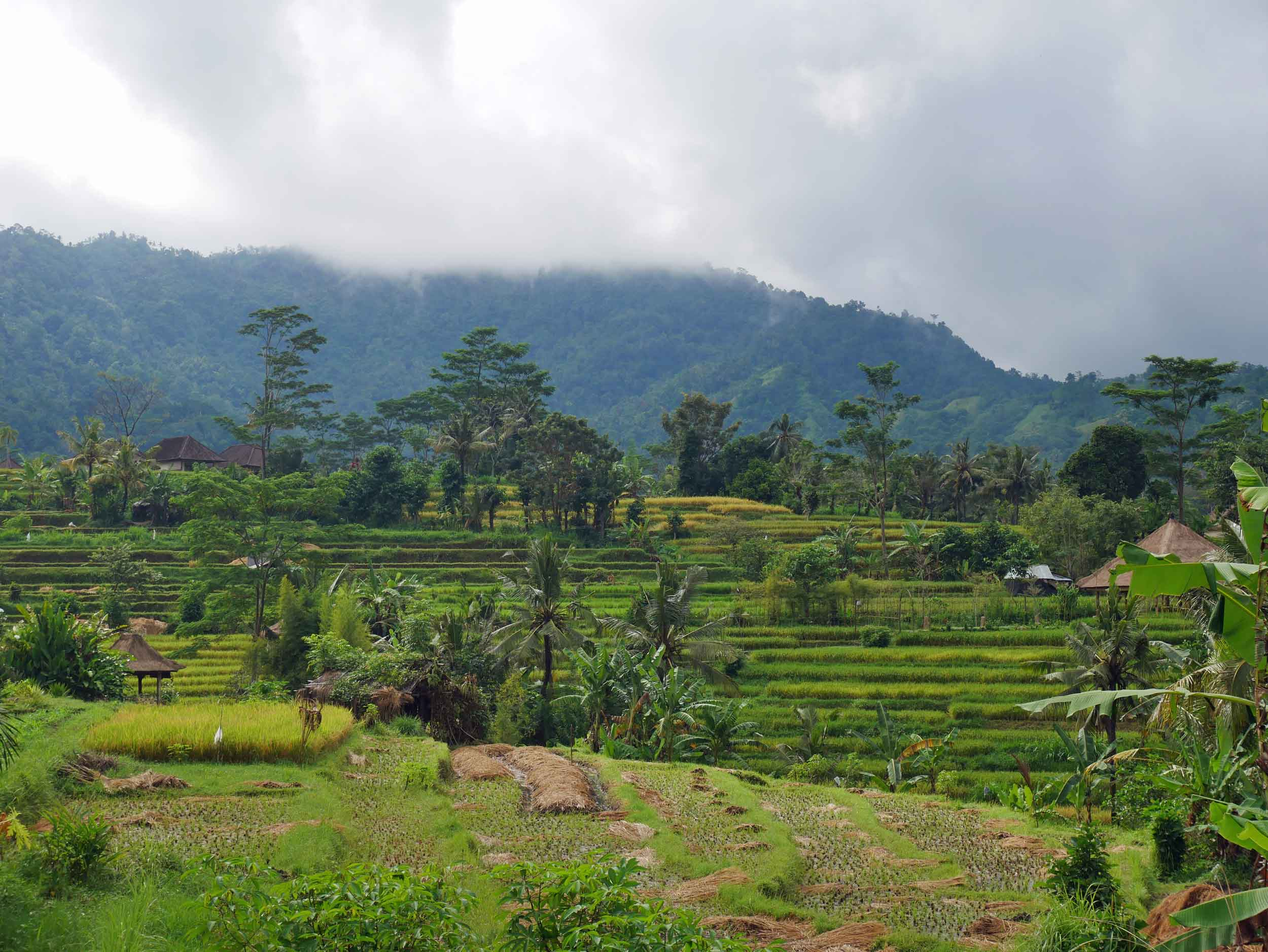 A moody landscape of the Sidemen valley with rice terraces.