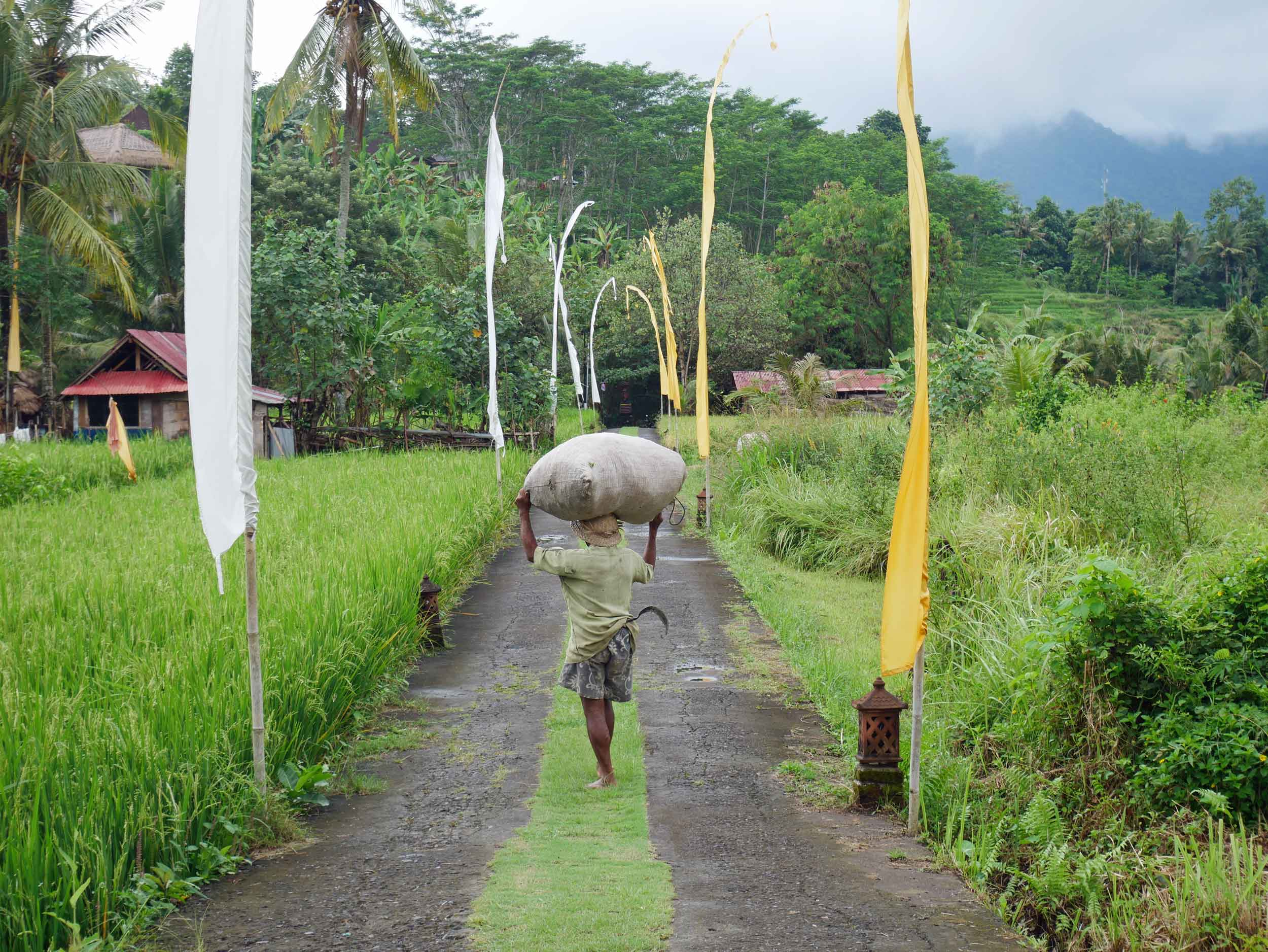 As workers returned from the fields, we spotted both men and women carrying back their harvest of the day.