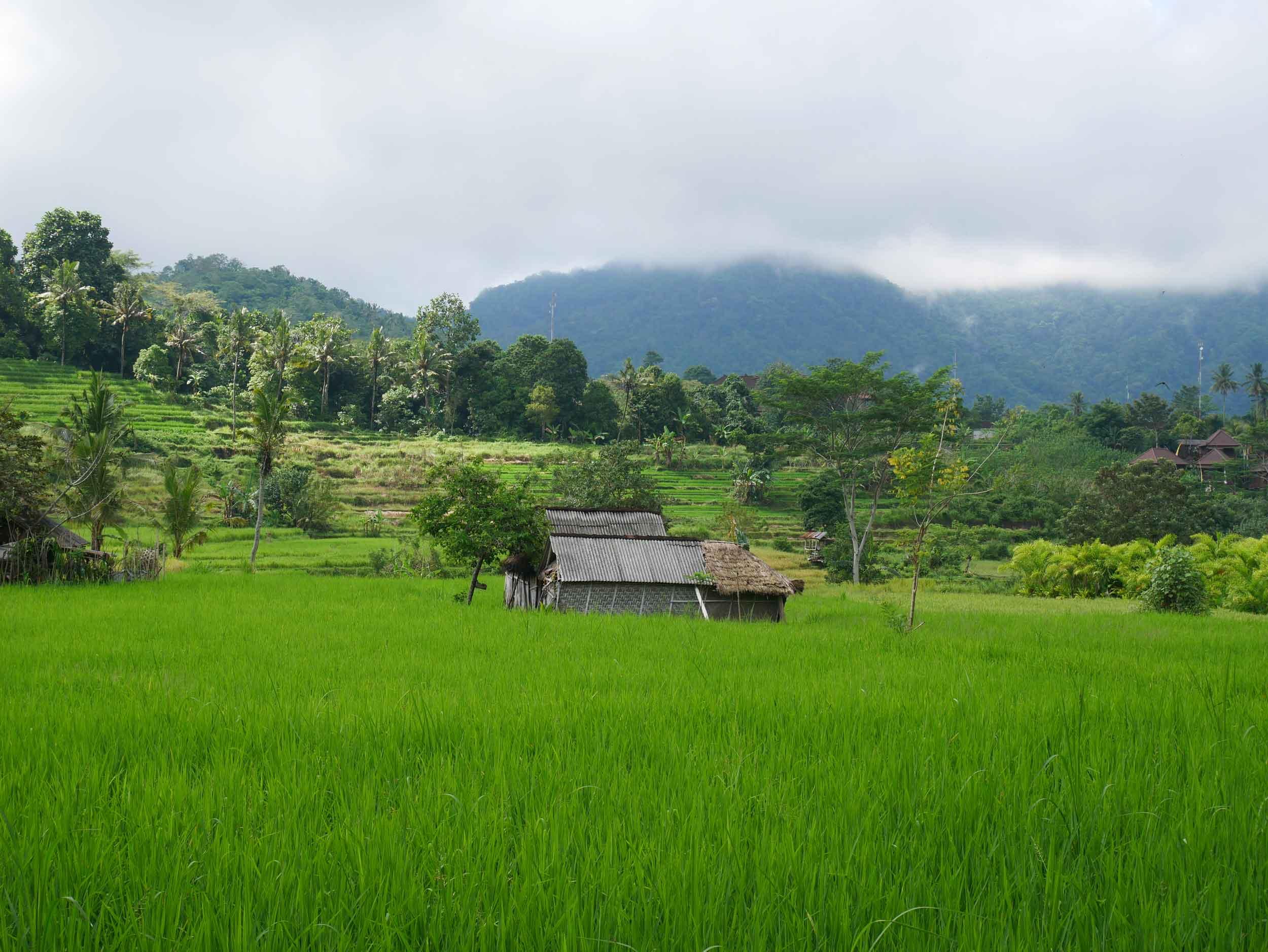 The bright green fields and surrounding hills of Sidemen were a beautiful sight.
