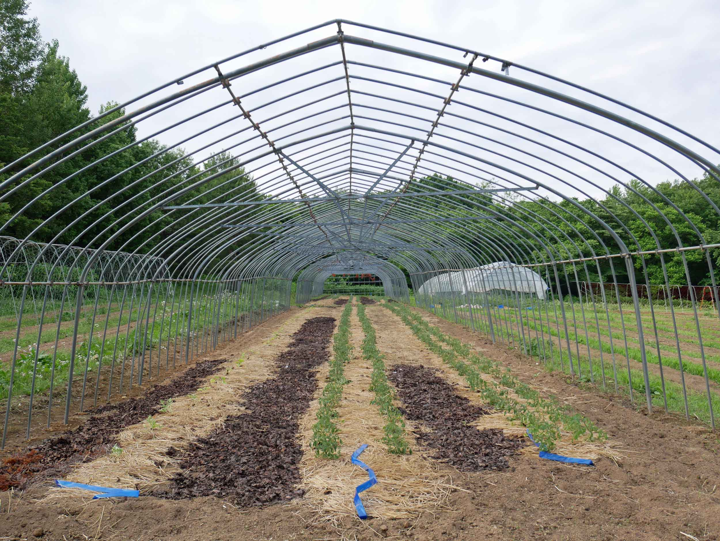 Greenhouse in prep, where Kat-San used the fallen leaves of Japan's famous cherry trees for soil-enriching compost.