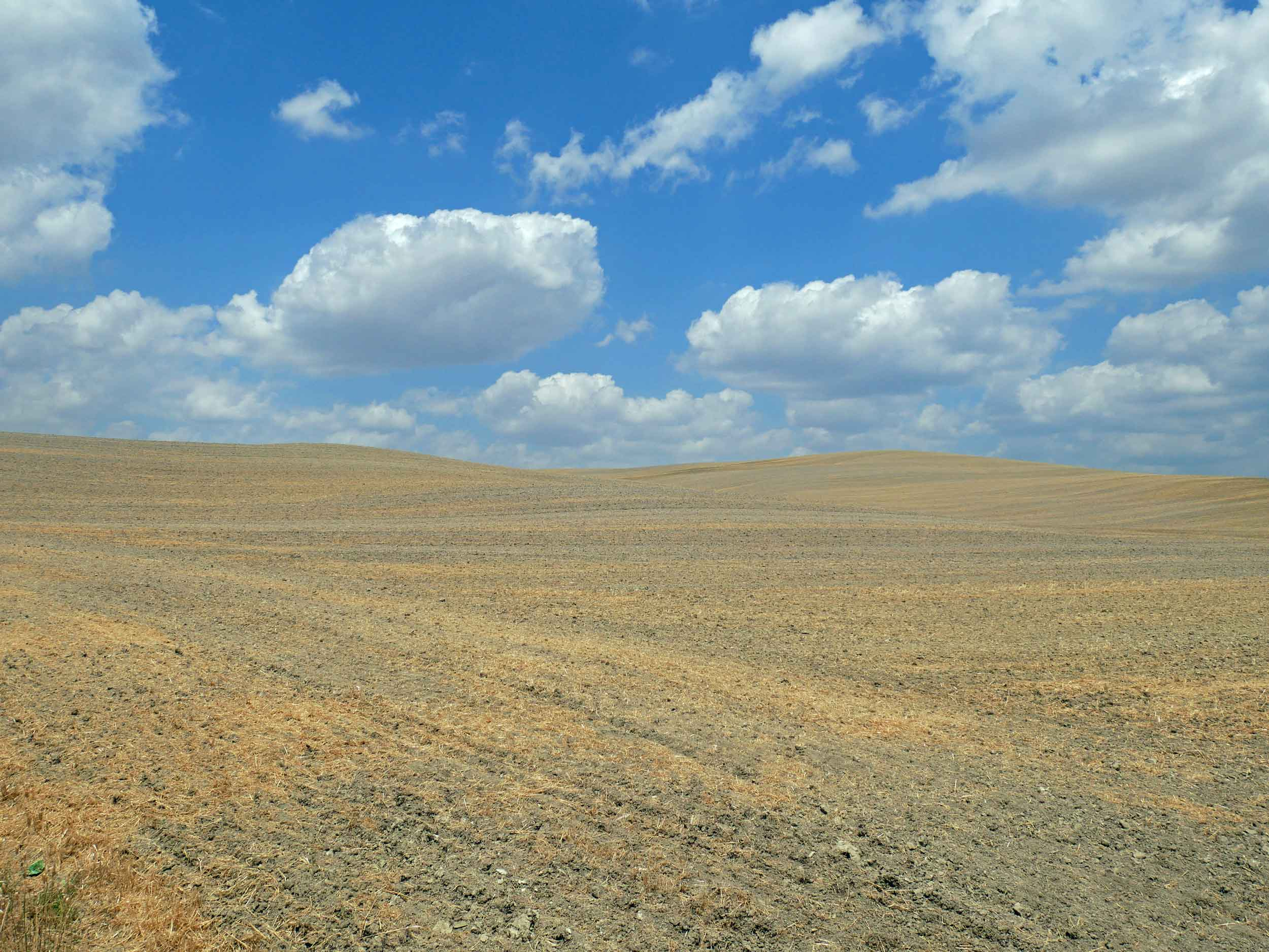 Big white fluffy clouds dotted the blue sky against yellowed fields, creating a real life Tuscan painting.