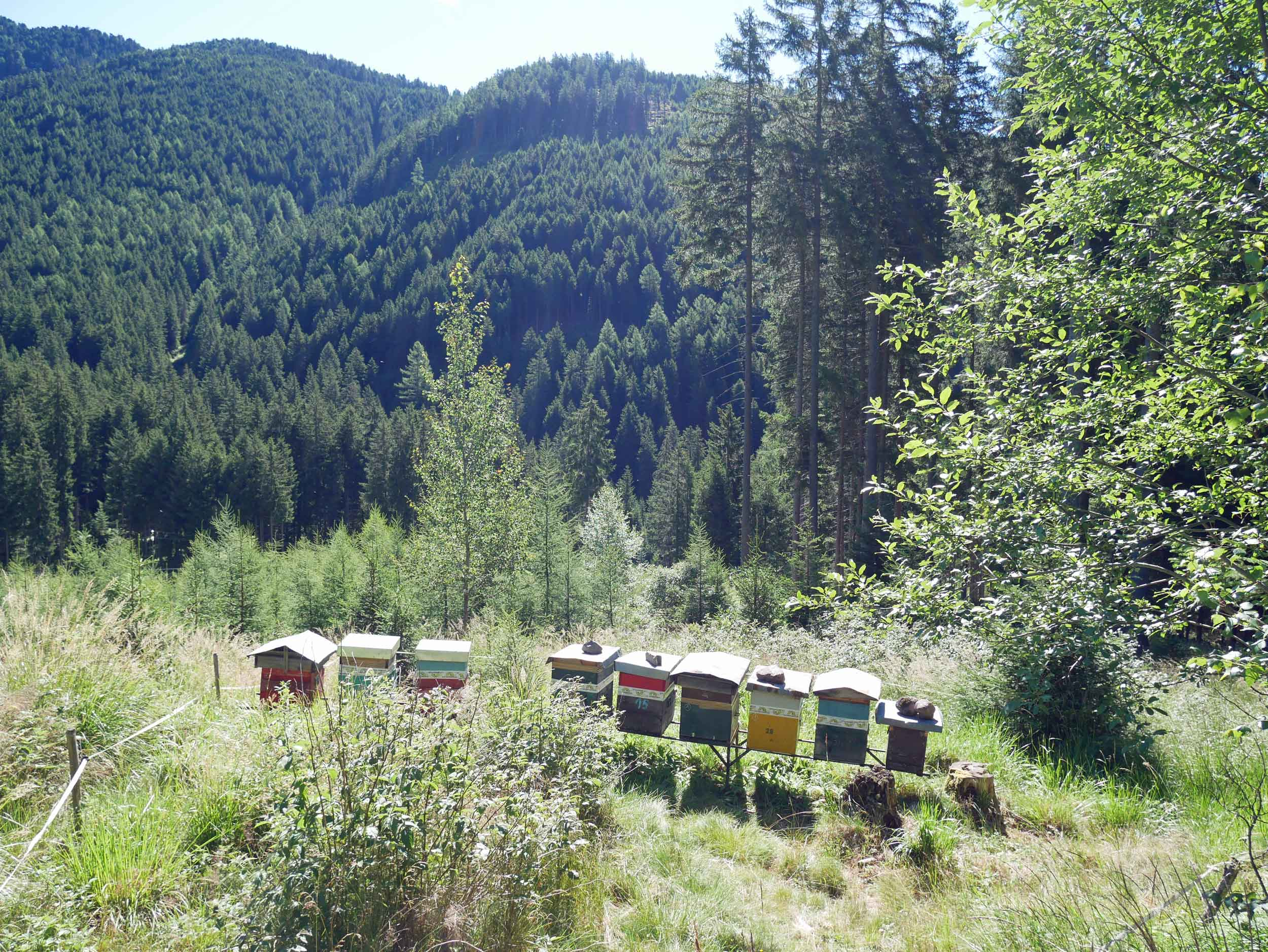 During our walk, we stumbled upon a colorful bee apiary, Martin's latest obsession. :)