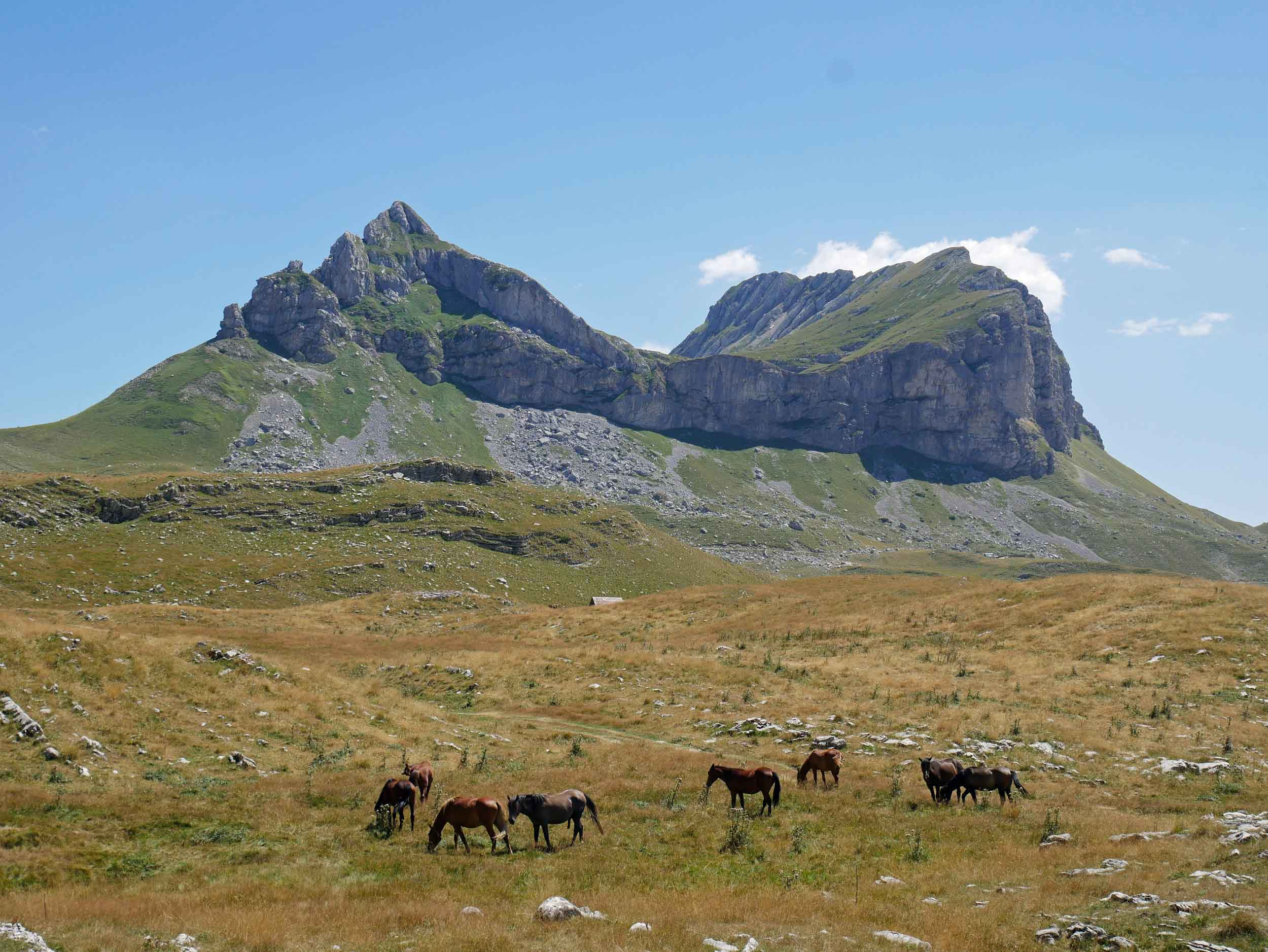 One of our favorite views was of Sedlena Greda peak (2,227m) with horses grazing in the fields below.