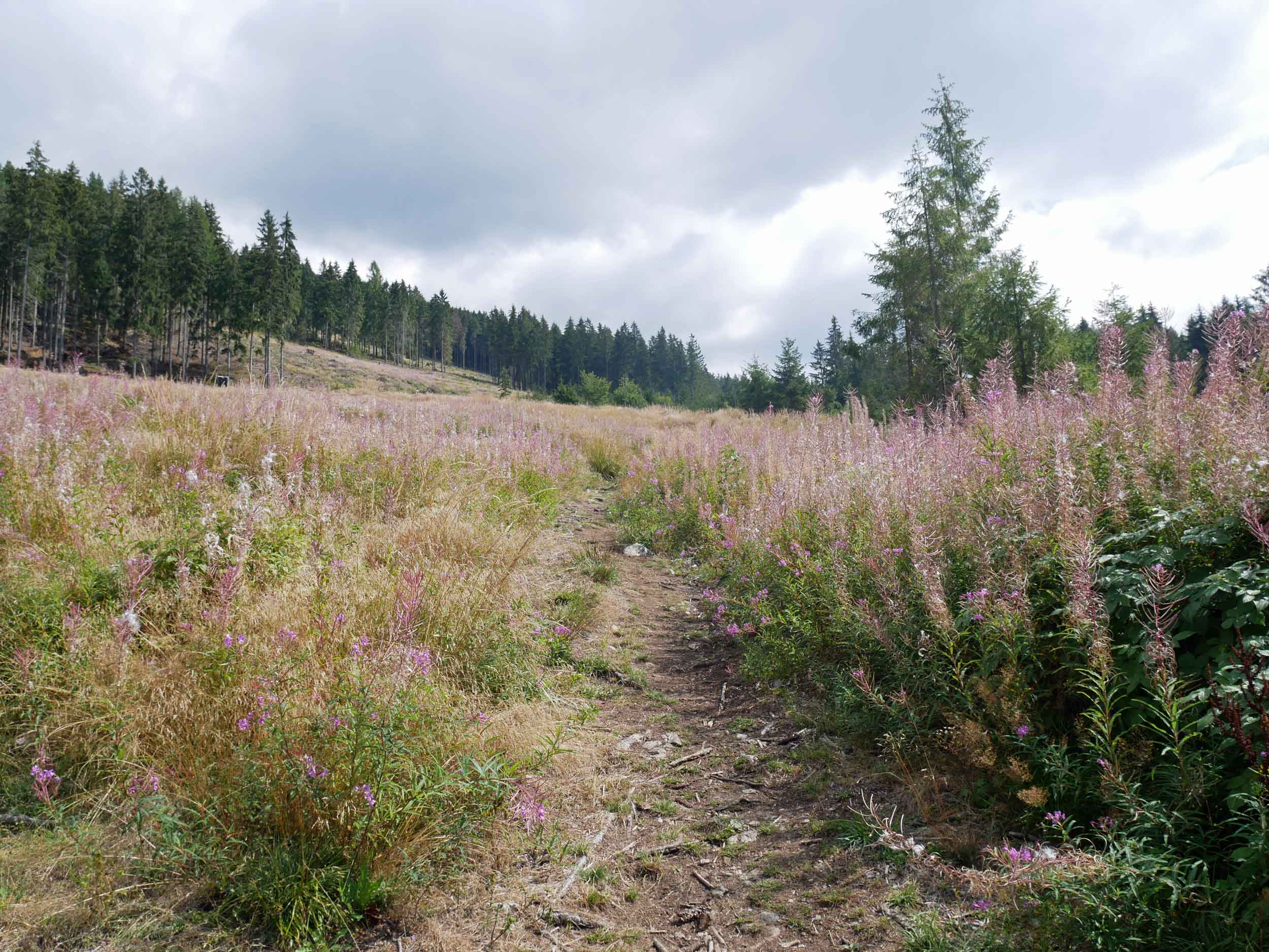 The path before us in the Western Tatras, the hillsides covered in beautiful purple flowers that had gone to seed.