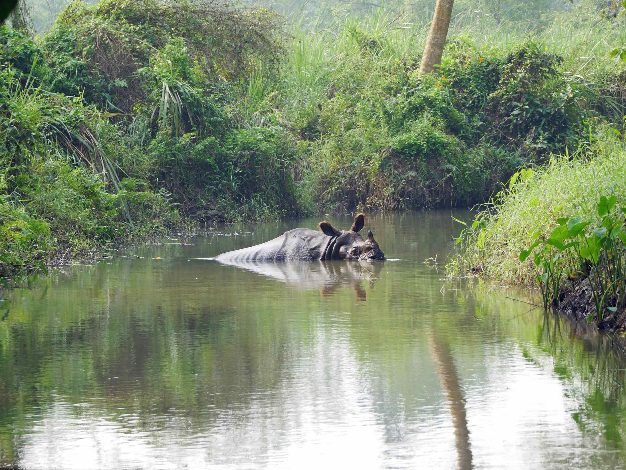 While on foot, we spotted a large male rhino beating the mid-day heat.