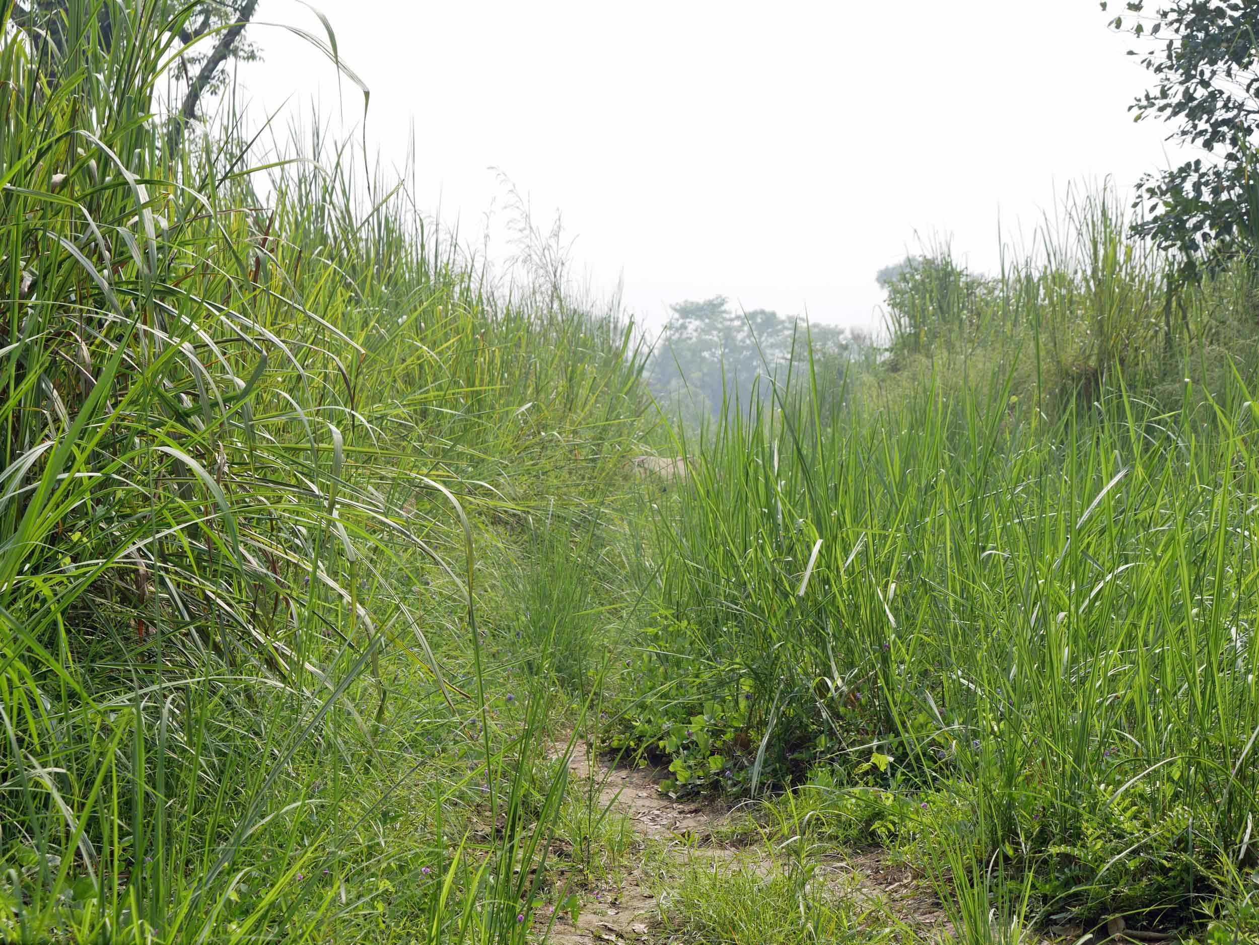 The majority of our walking tour was spent wading through exceptionally tall grasses – can you spot the hide of a rhino in the central background?
