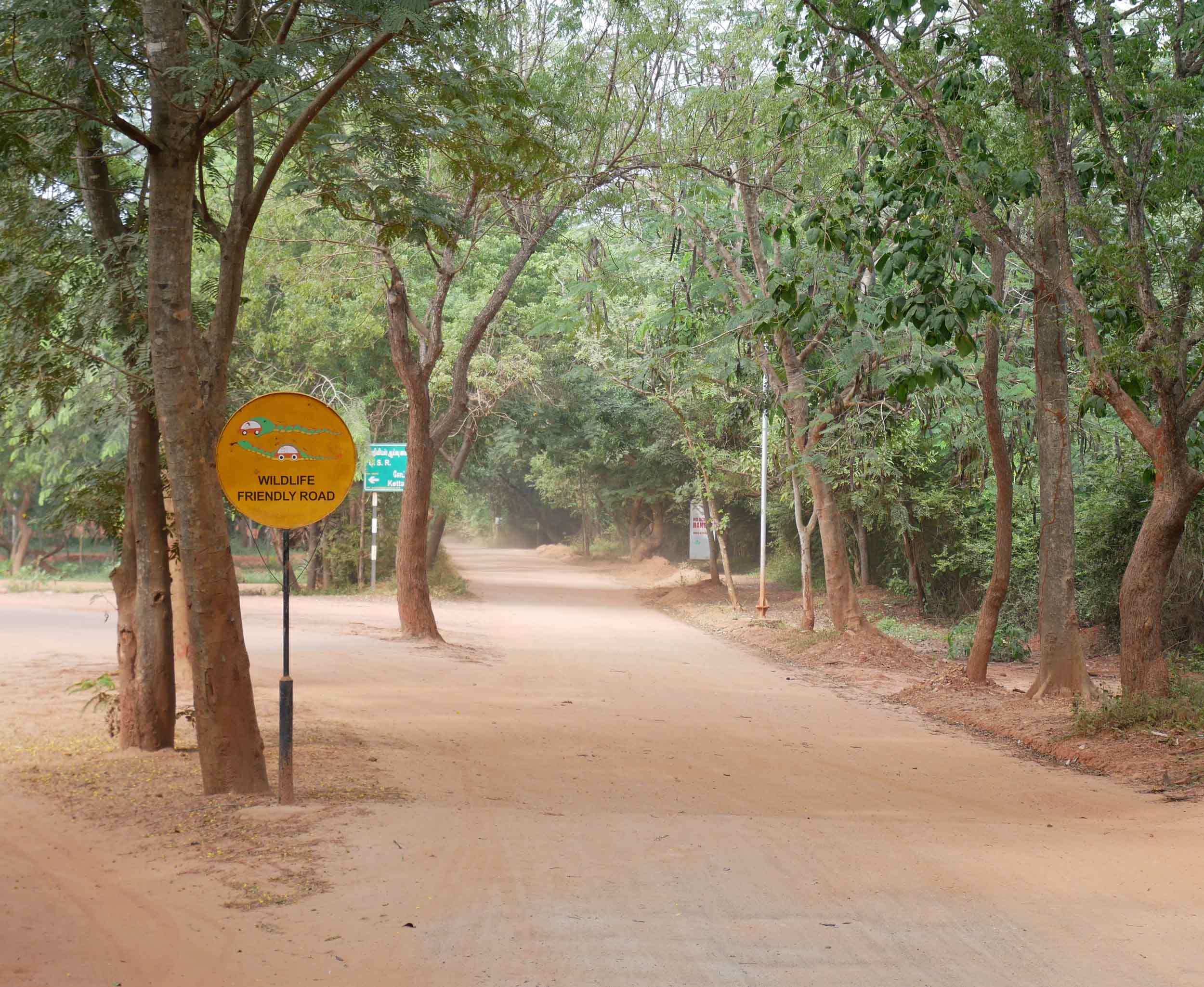 With rented motorbikes, we were free to explore the dusty roads of Auroville.