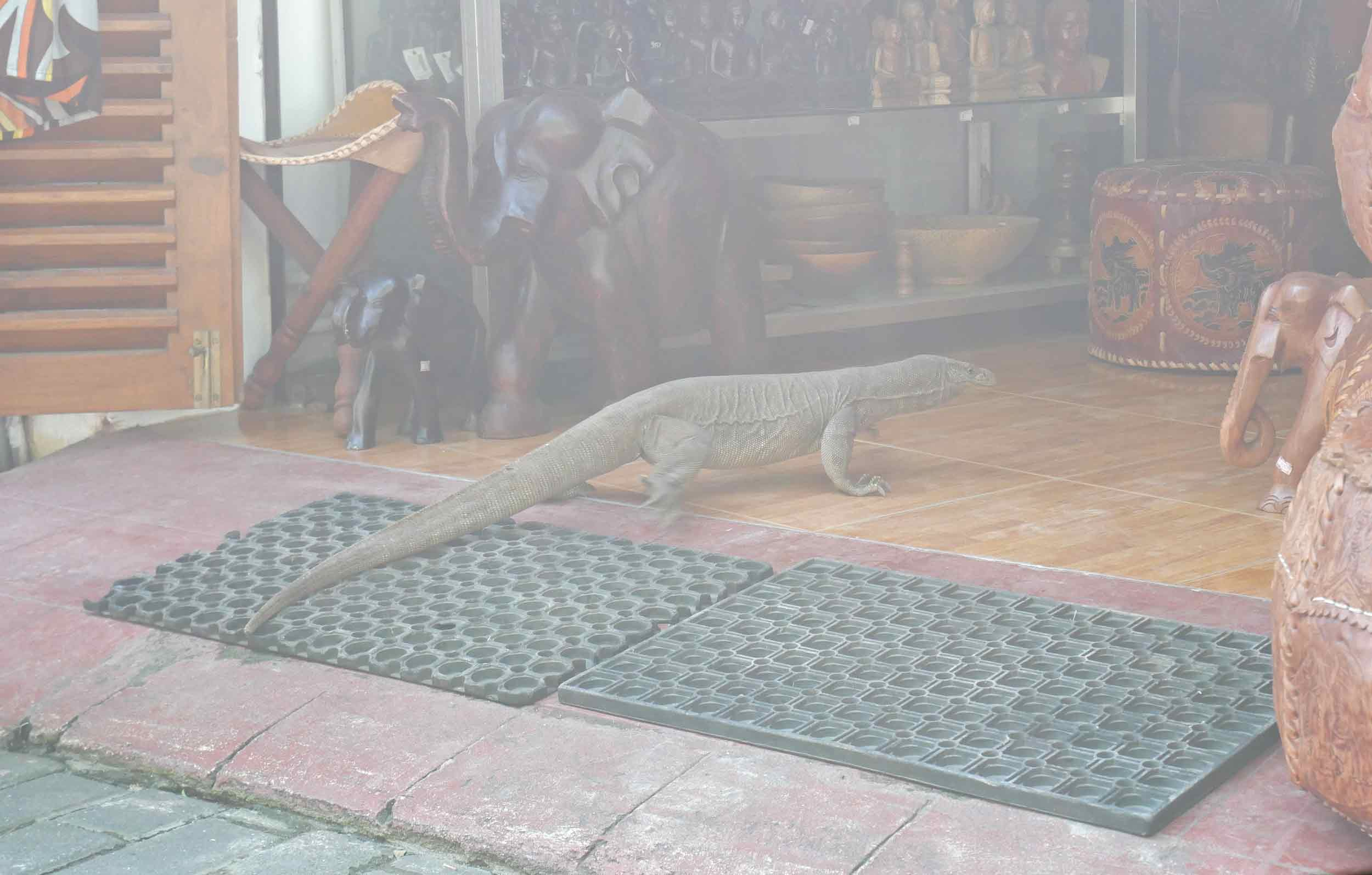 A monitor lizard decided to have a browse in a local shop.