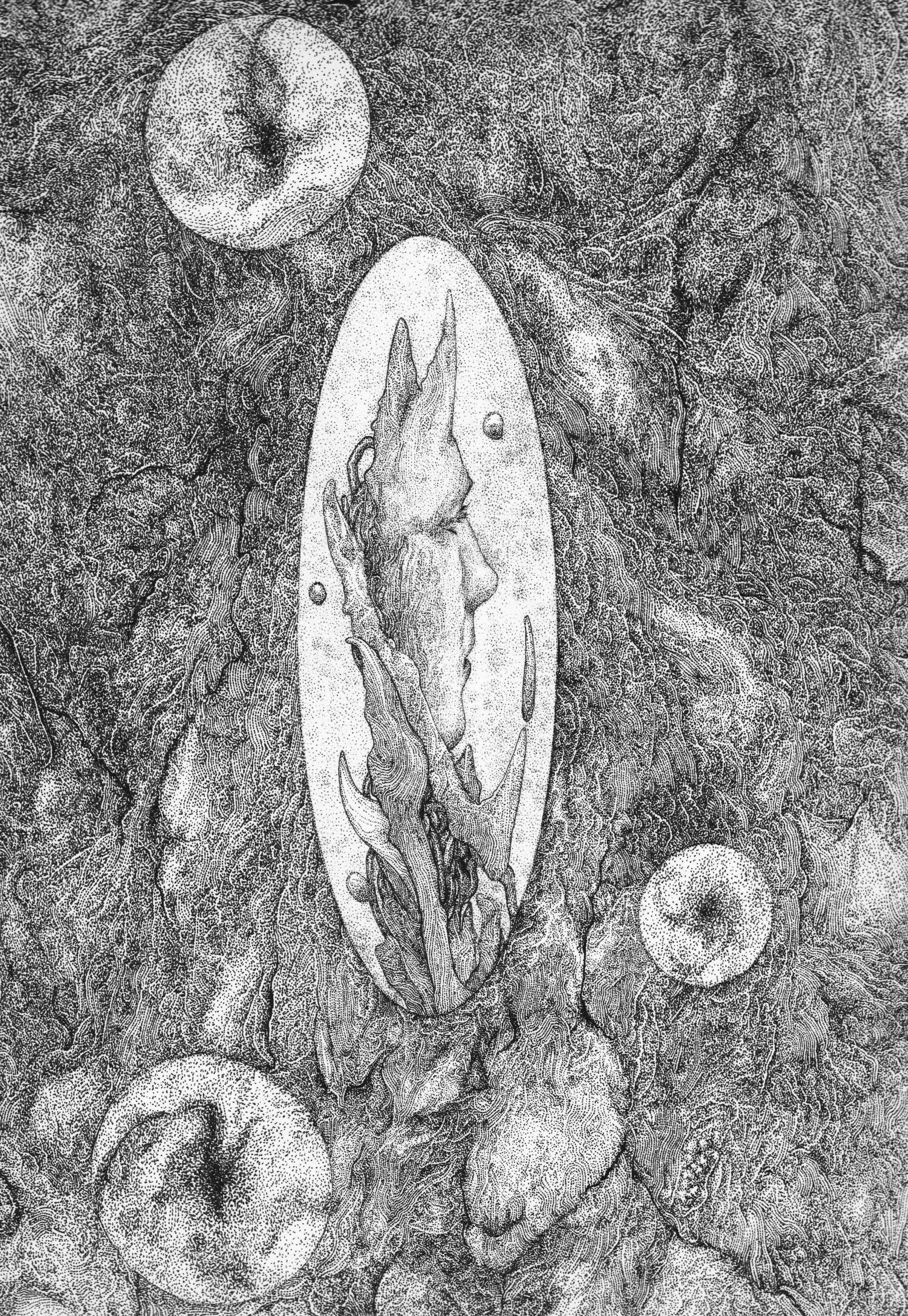 Wormhole V : Celestial Orifice
