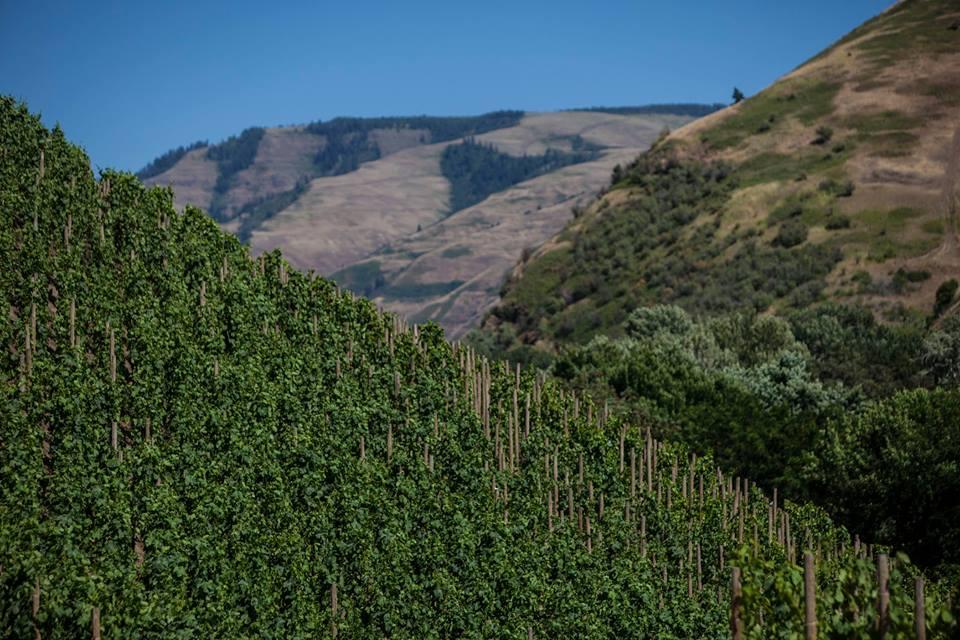Elevation Vineyard - Walla Walla Valley