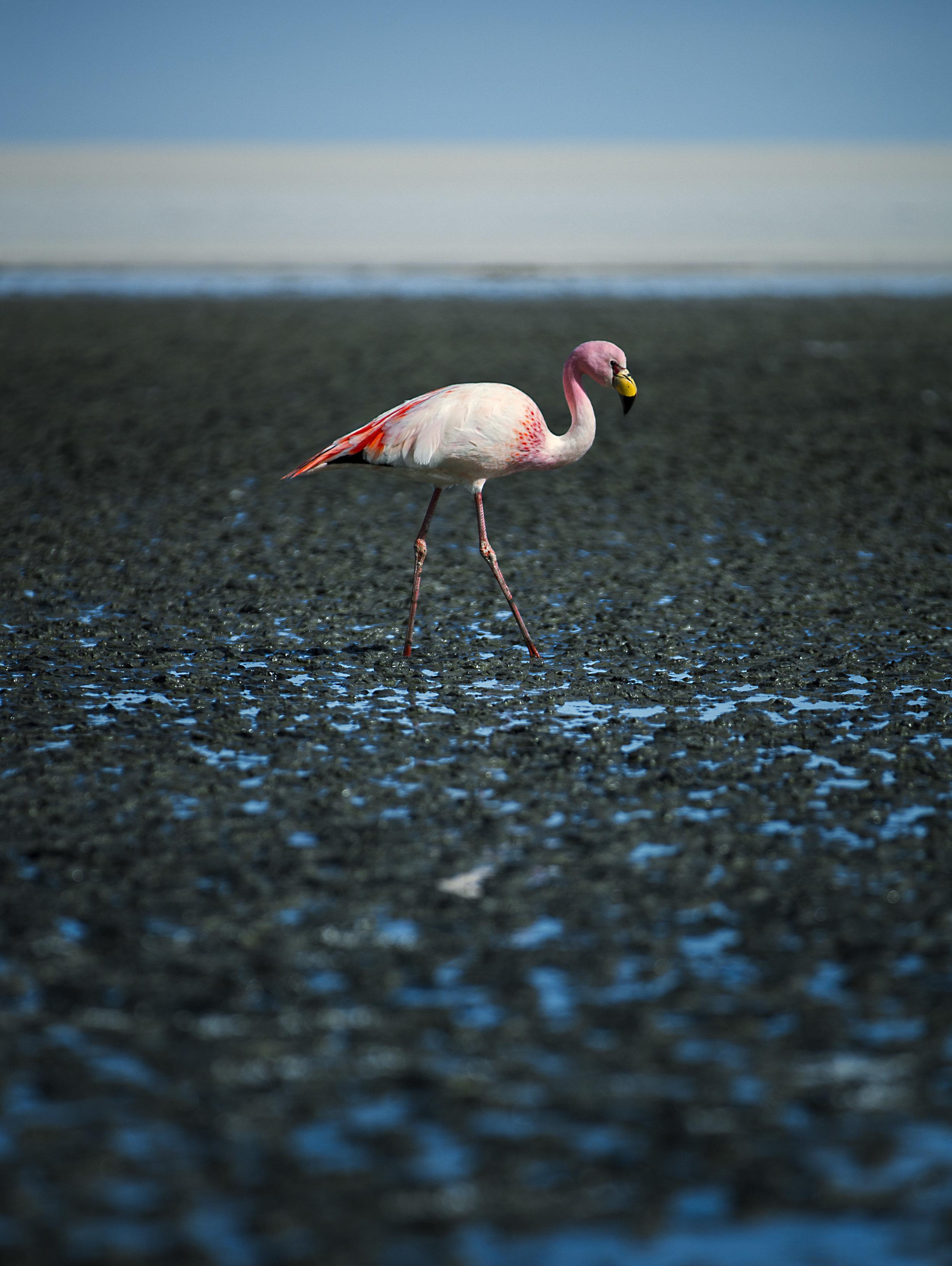 Simon+Needham+Photography+Salt+Flats+10.jpg
