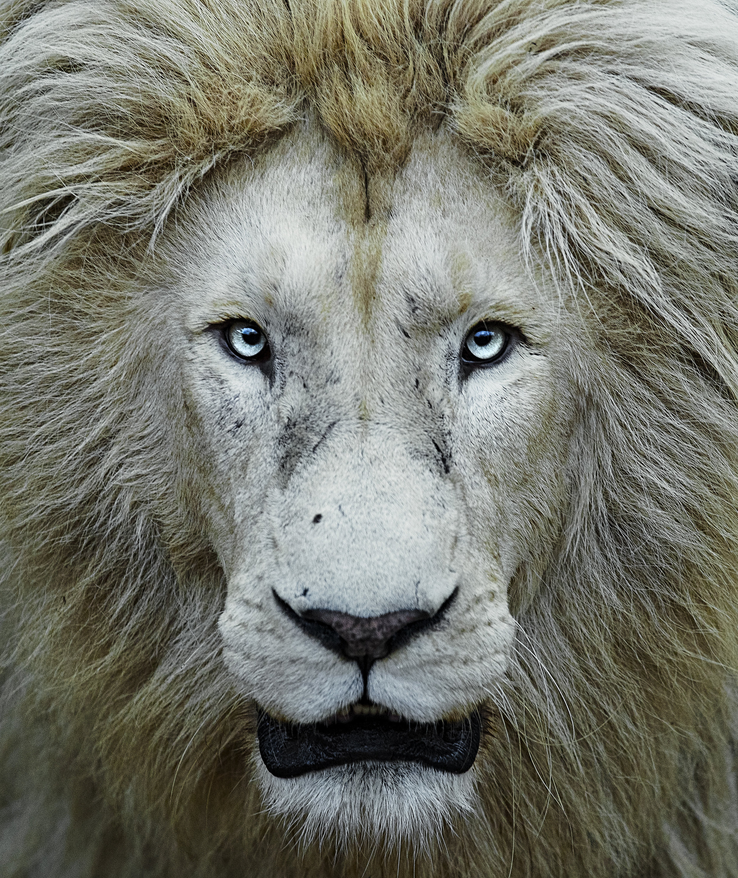 Simon+Needham+Humanitarian+Photography+Lions+of+Africa+21.jpg