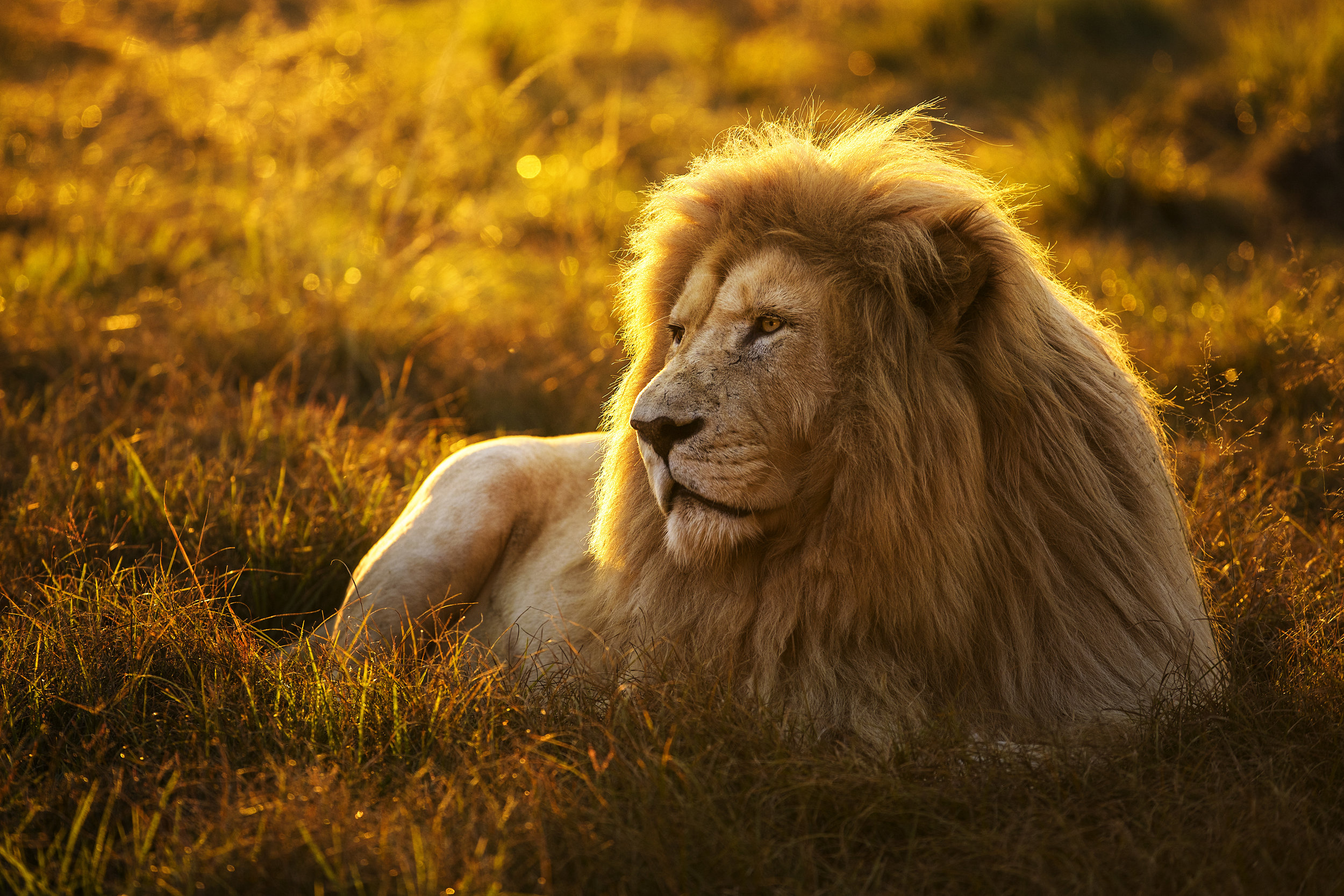 Simon+Needham+Humanitarian+Photography+Lions+of+Africa+6.jpg