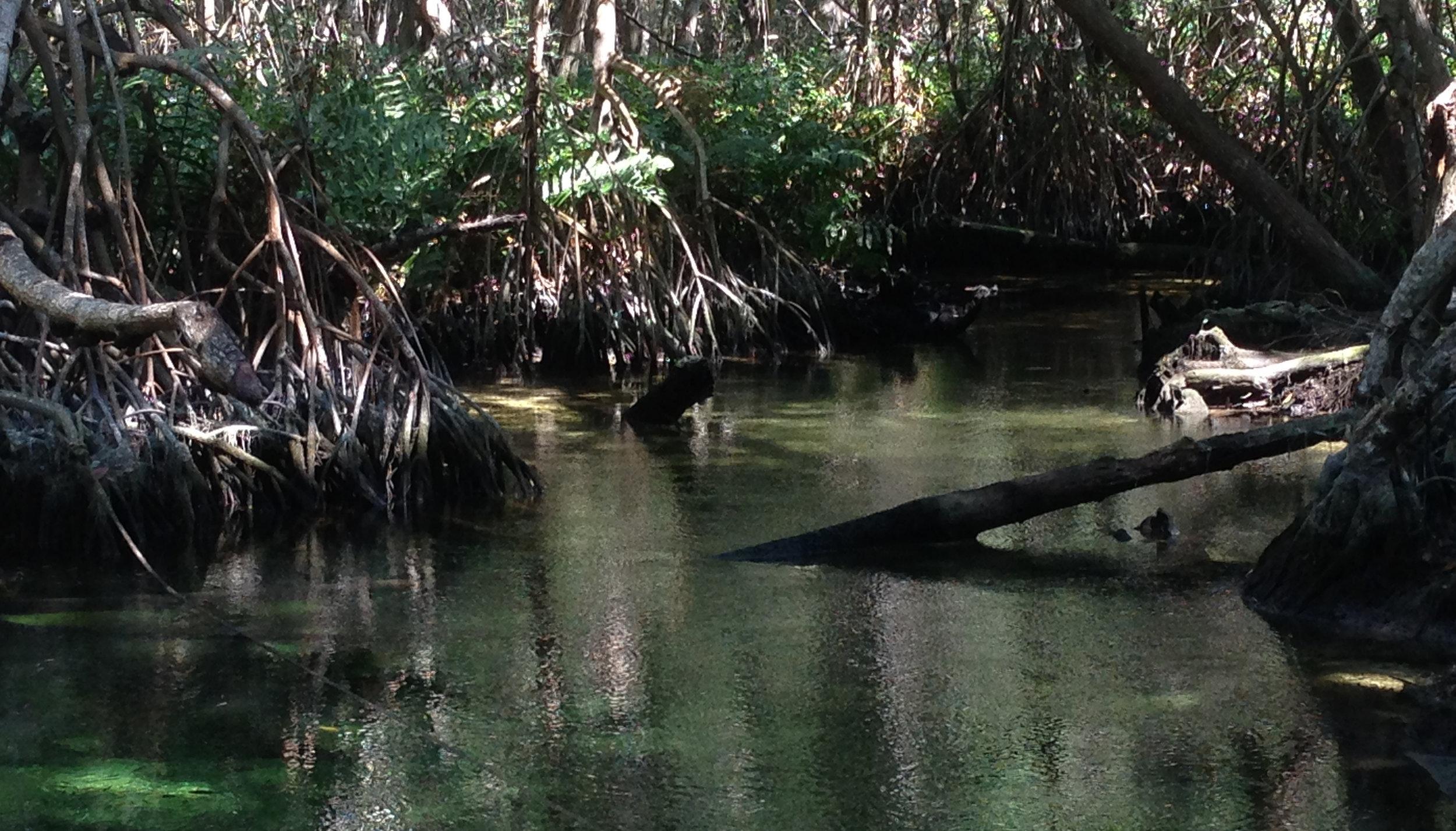 swamp_sm-1.jpg