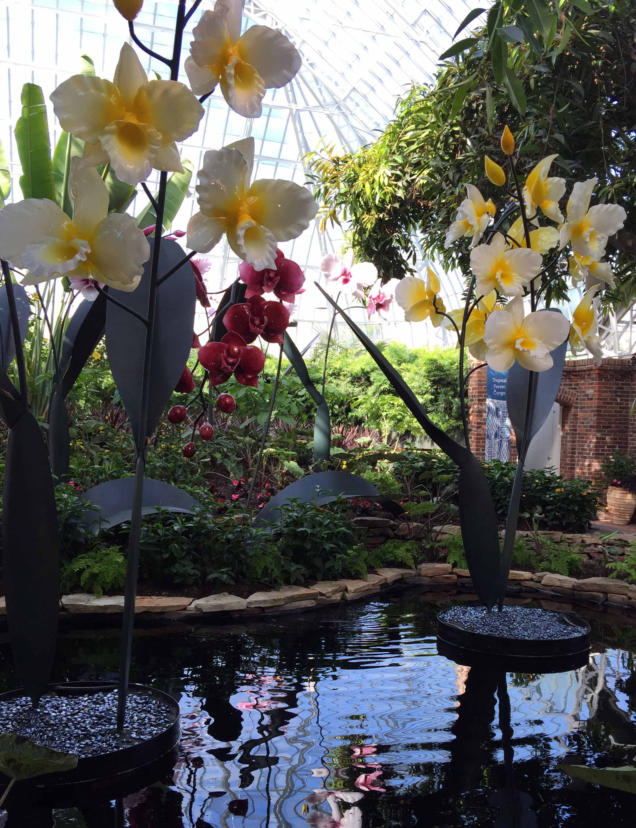 phipps-whiteorchids-tall.jpg