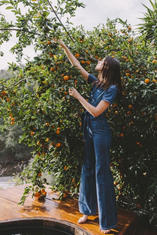 14 Orange Trees - Planted in Italy in 2017