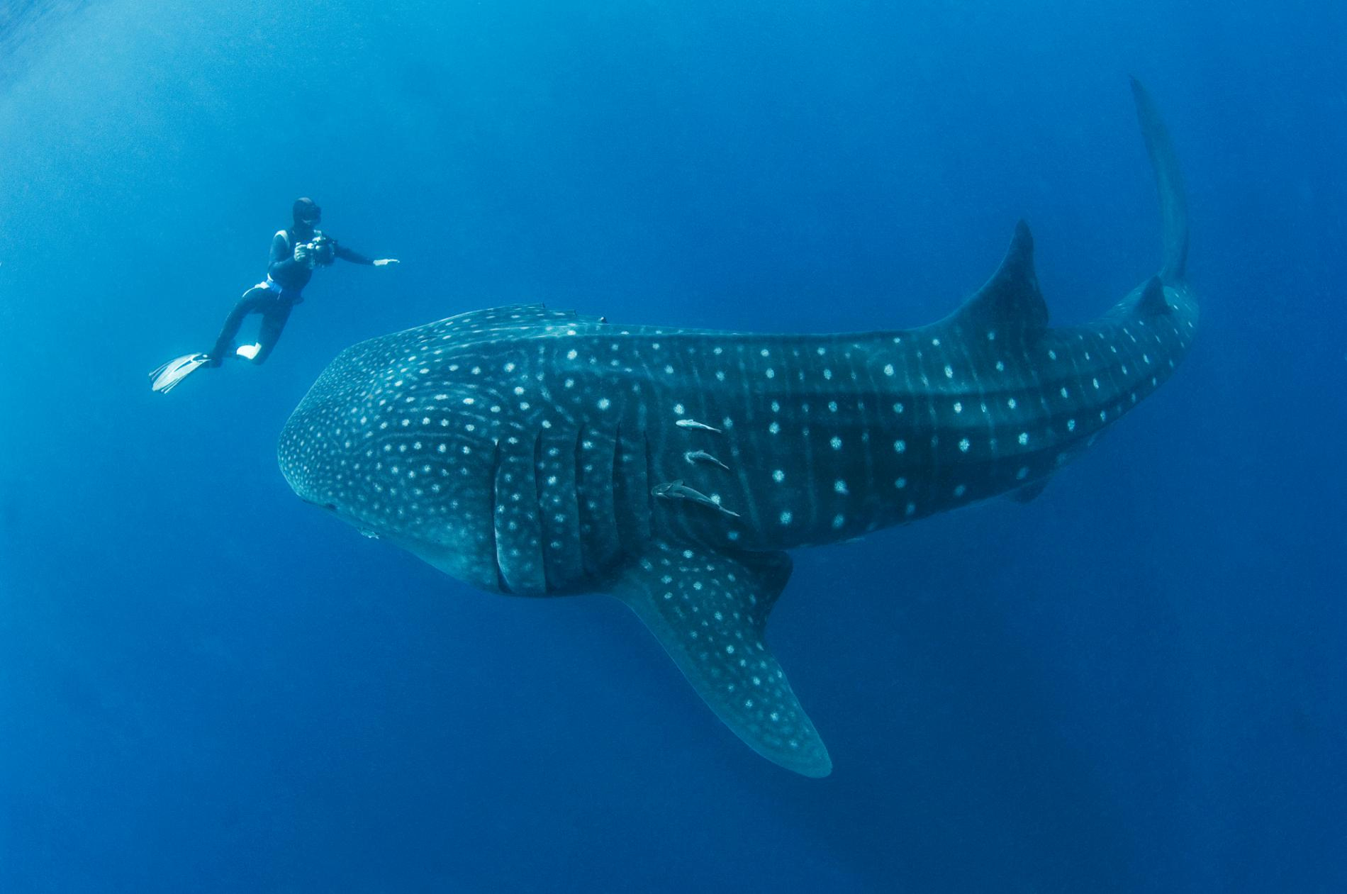 Epic Marine Adventure - Embark on an epic marine day excursion.