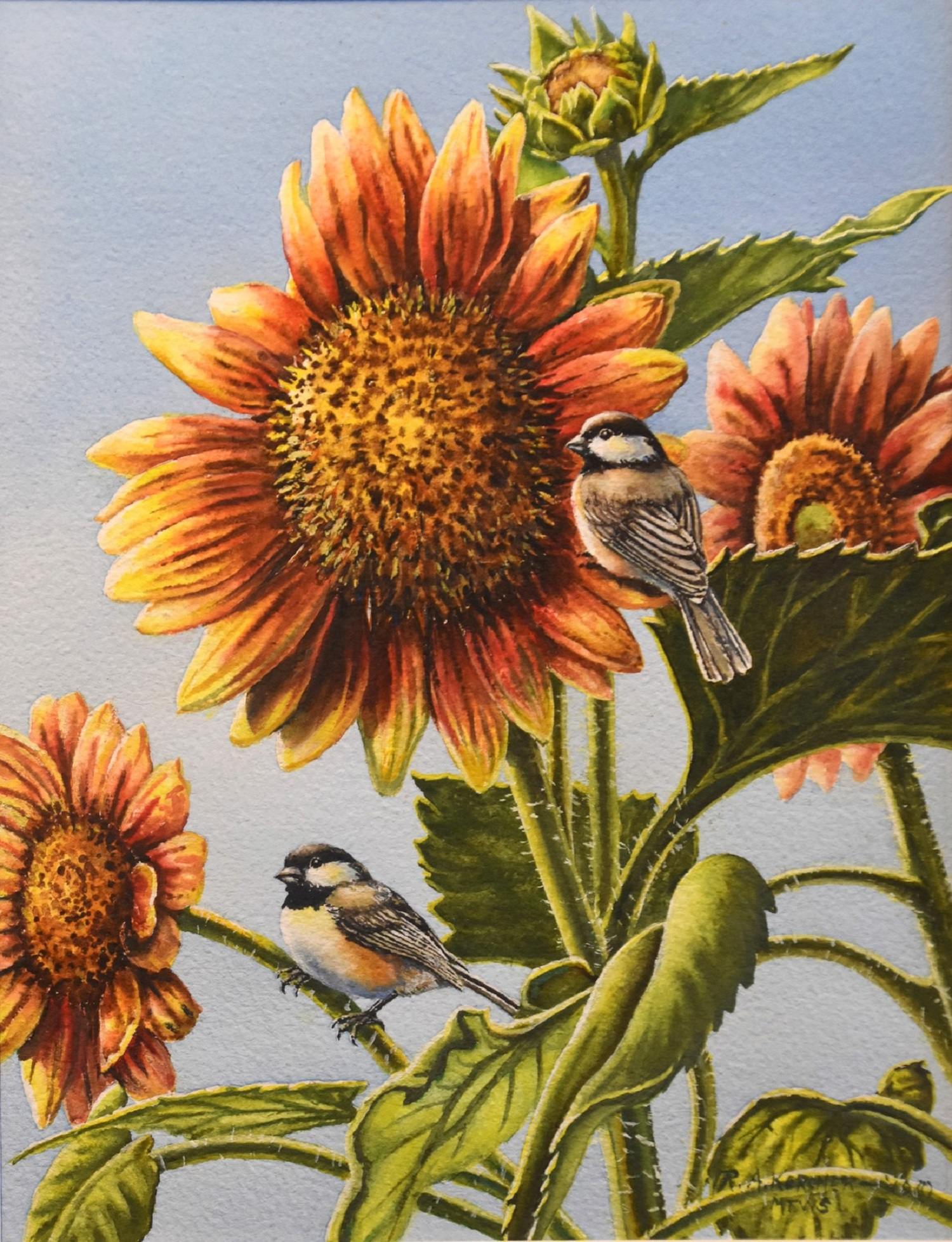 Blaze of Color - Chickadees and Sunflowers -  Bob Kercher  Watercolor