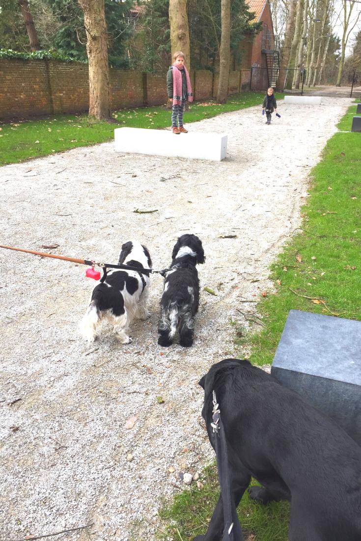 Jules and Louis blog - wat ik leerde van mijn hond - Lilly en Luna.png
