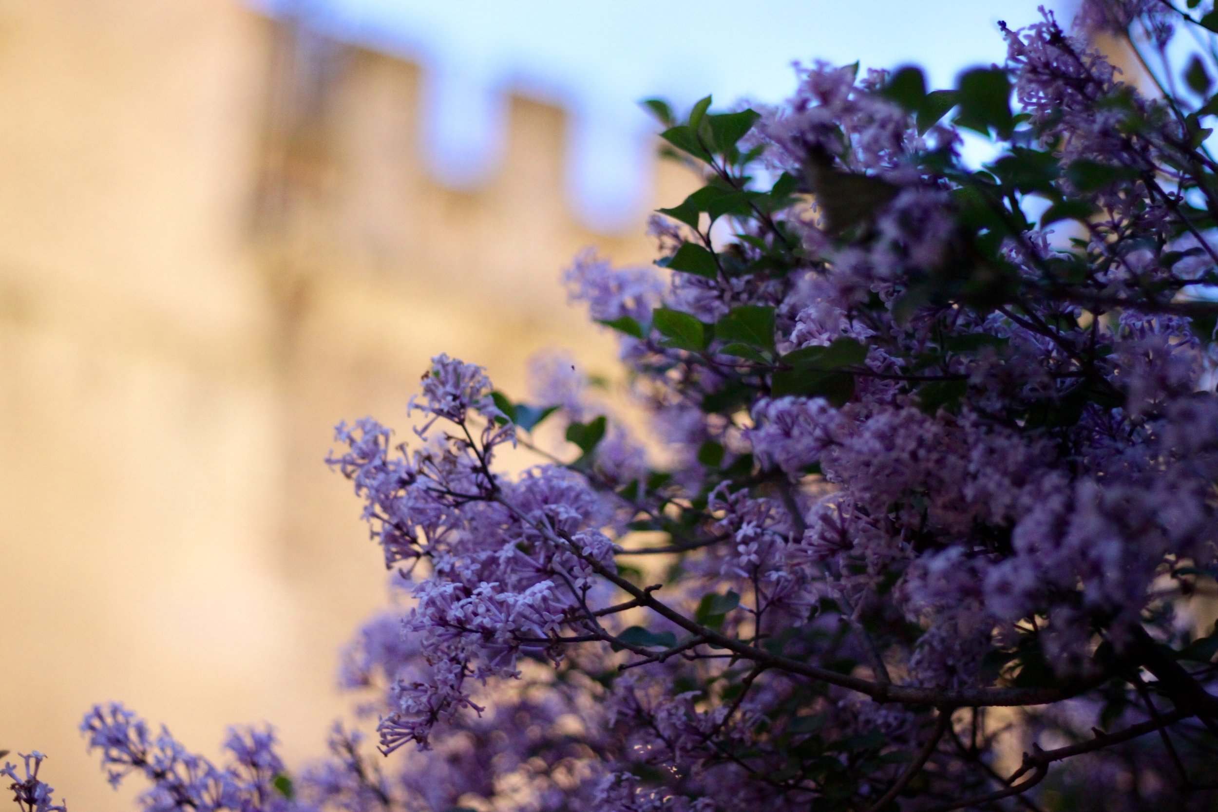 Flowers in Oxford, England.