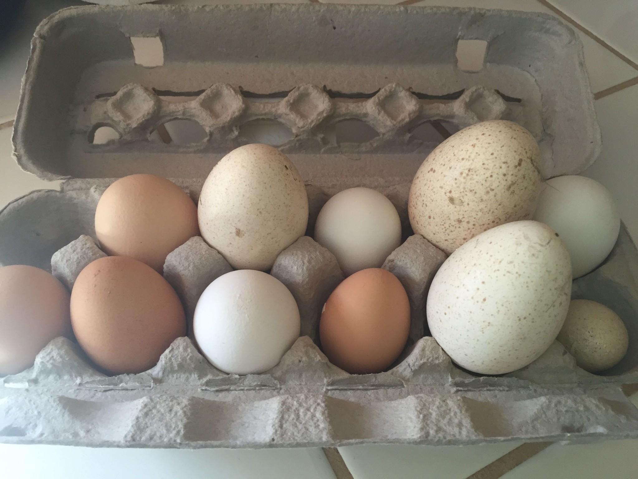 IMG_Eggs