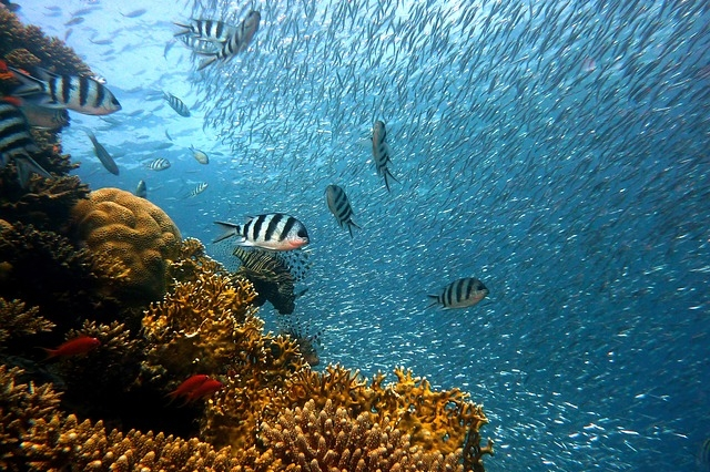 Explore the coral reef