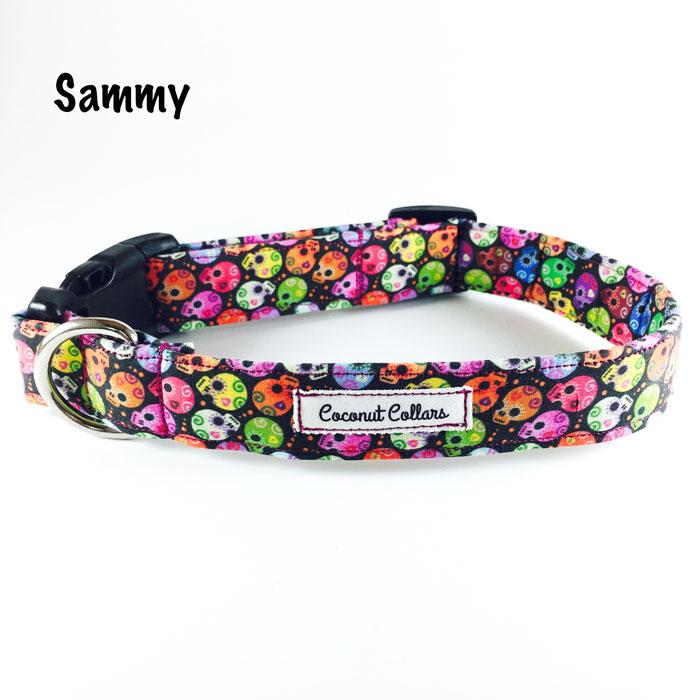 Sammy.jpg