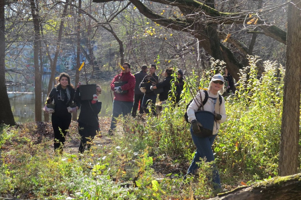 volunteers-planting-shrubs-1024x682.jpg
