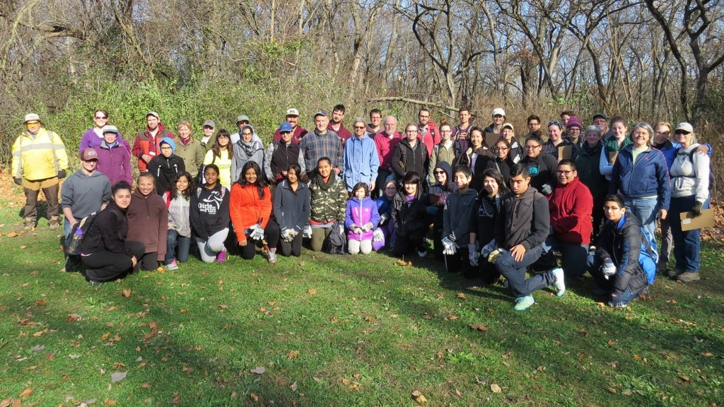 Volunteers at the November 15 planting day included 2 school groups and entailed a lot of organization.