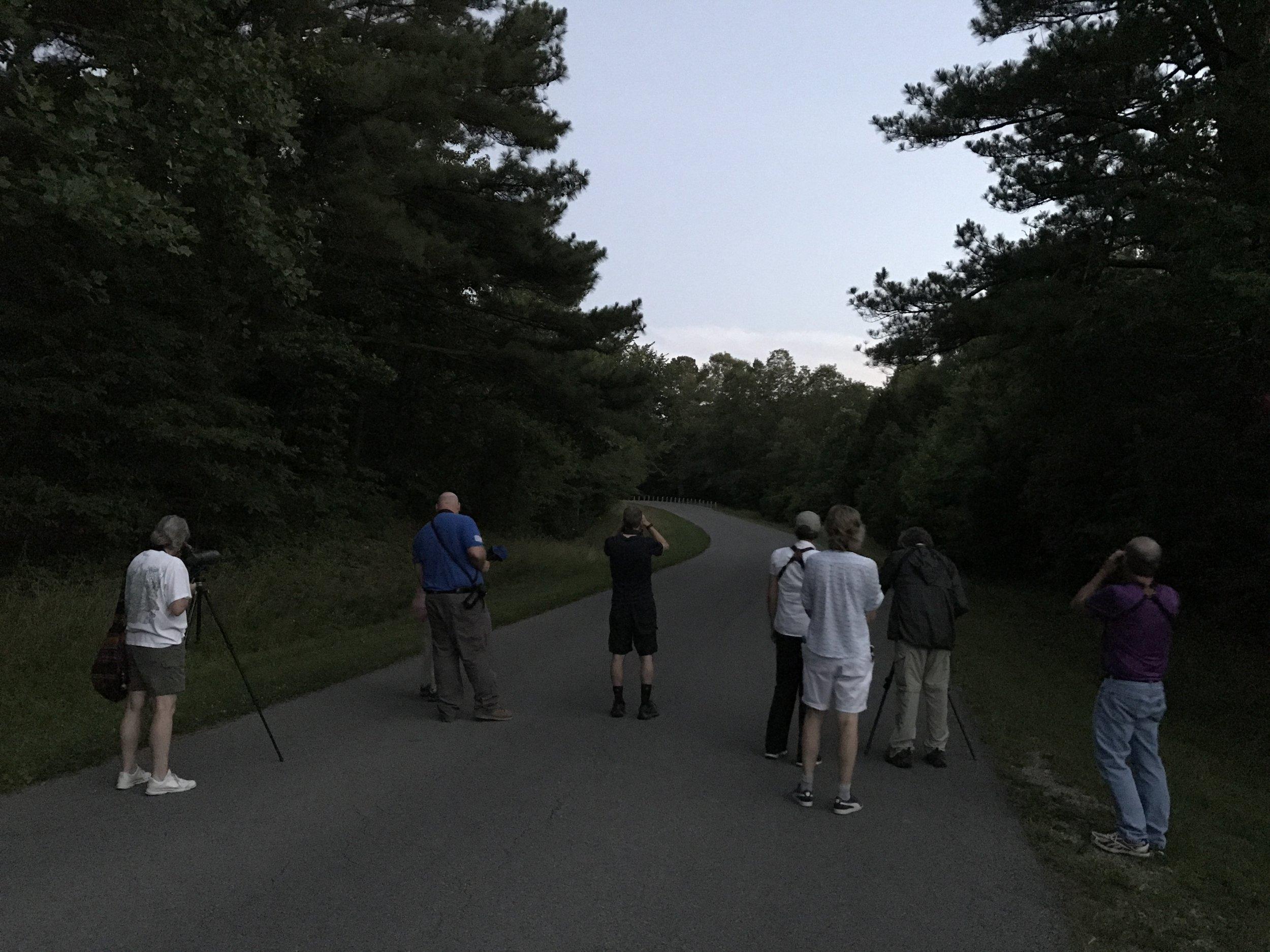 Night birding at Fern Clyffe