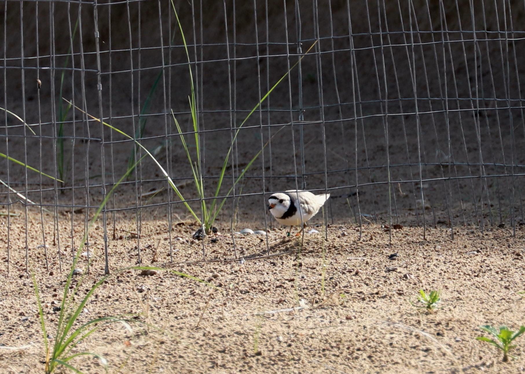 Monty at the enclosure - July 3