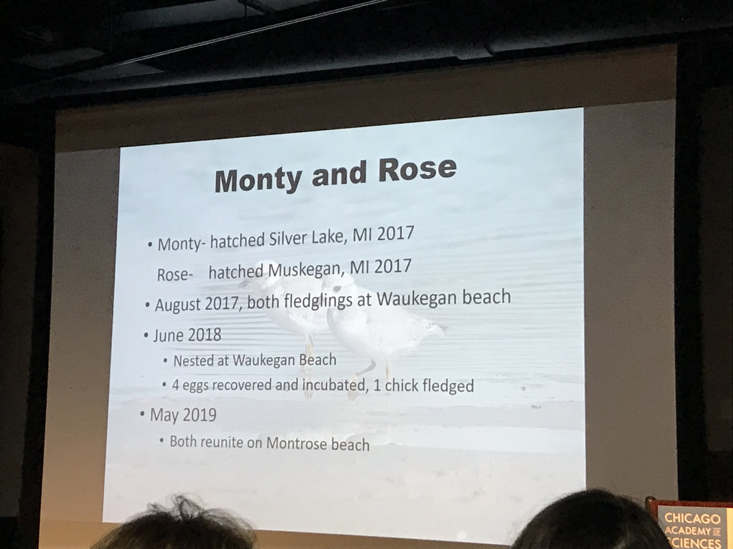 Slides from Dr. Cuthbert's presentation showing Monty and Rose's origins story and Chicago's impact Photos: Aerin Tedesco