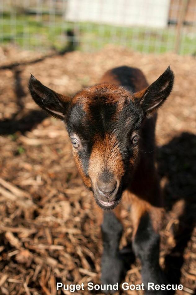 Gizmo; Born & Rescued, February 2015