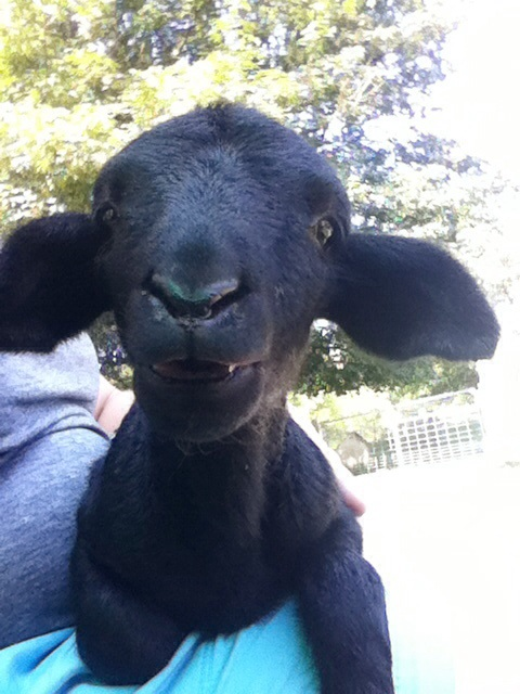 2: Be the Black Sheep