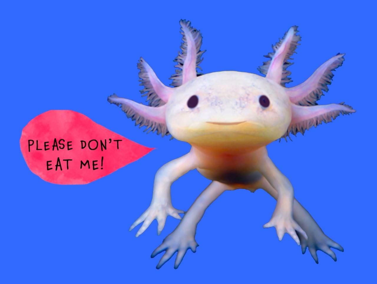 worldwide_buddies_axolotl_no_eating.jpeg
