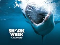 Shark-Week-2017.jpg