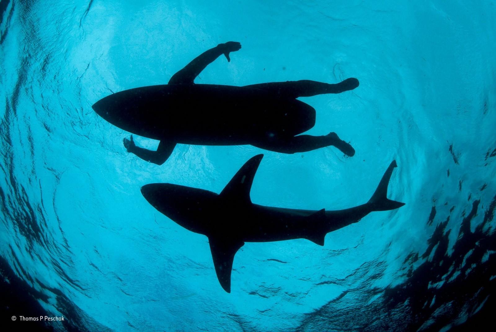 nature_water_underwater_sea_animals_winner_photography_contests-85600.jpg!d.jpg