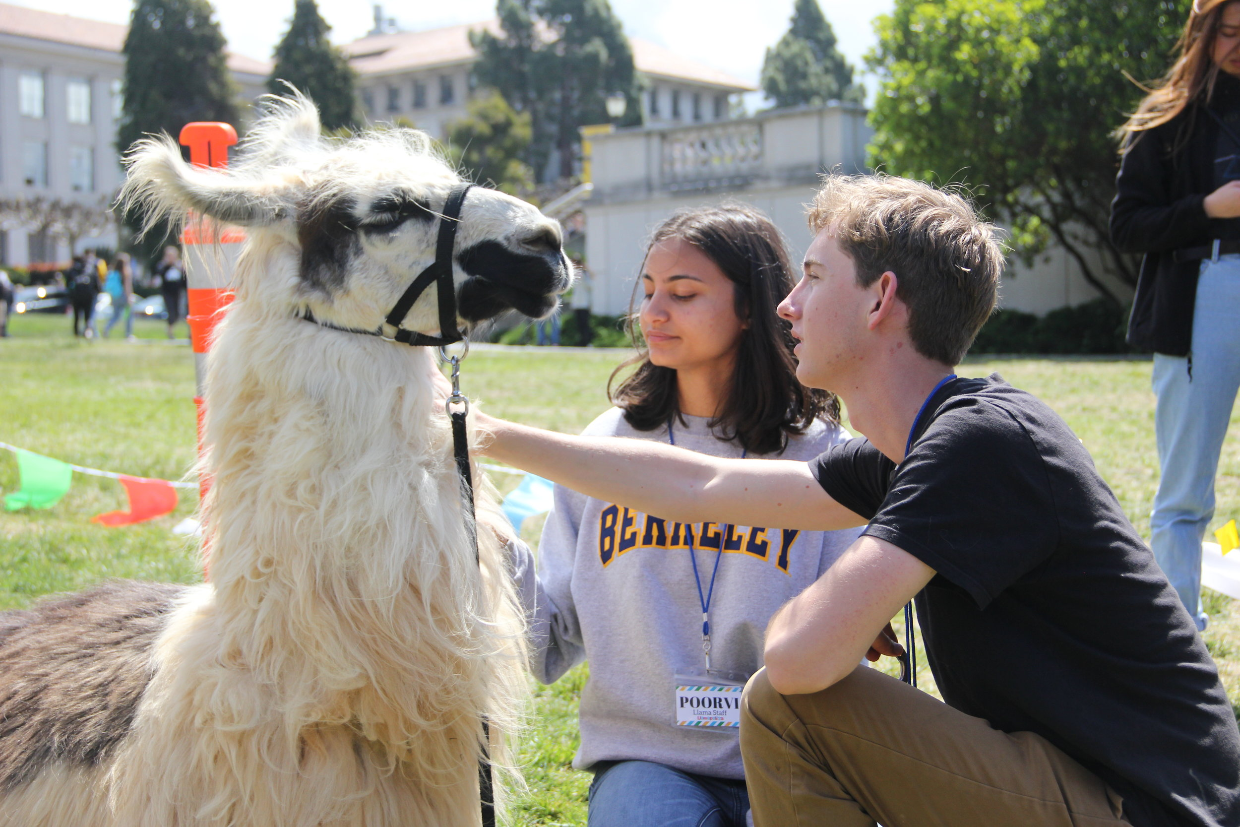 Llamas in UCBerkeley