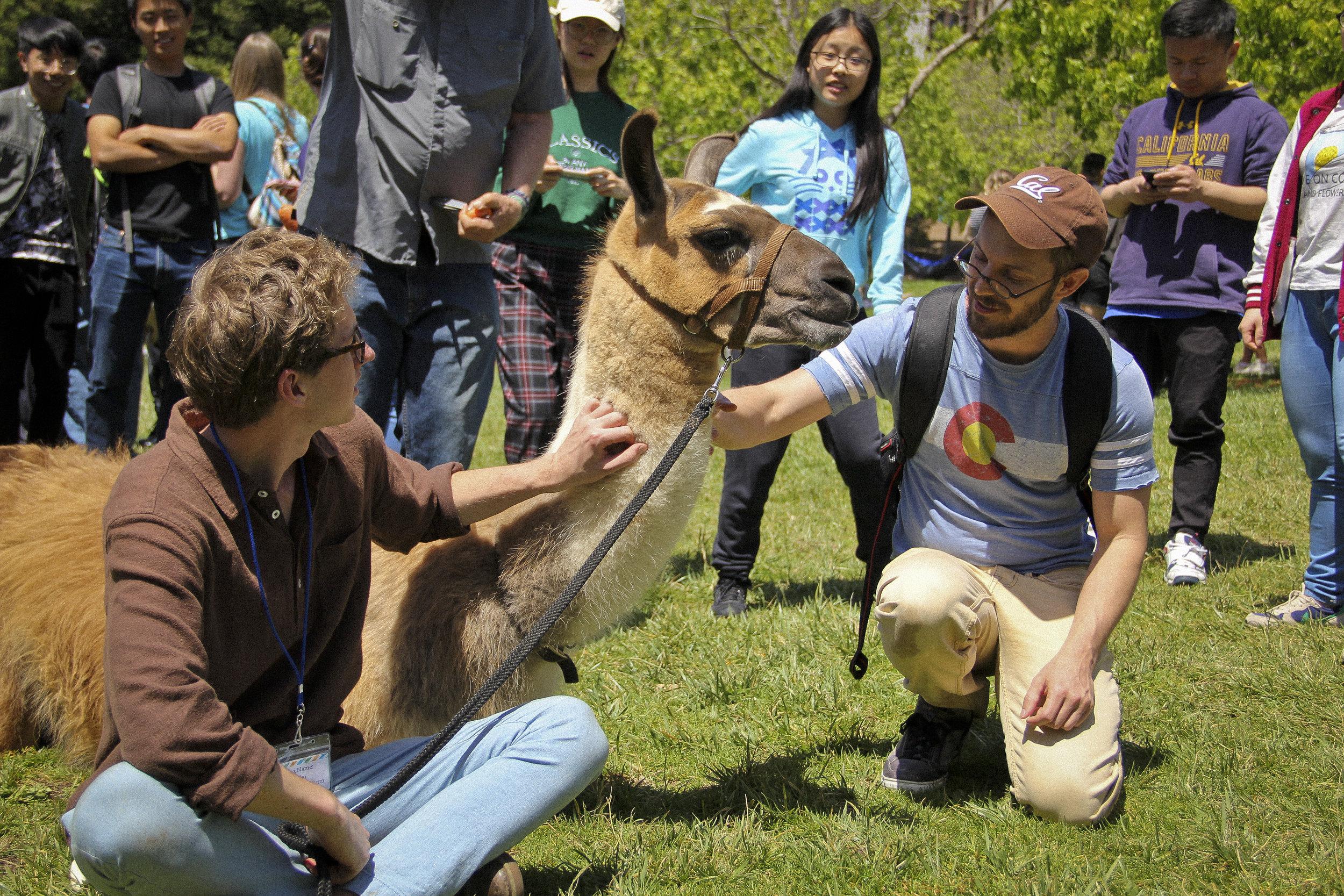 Llamas of Circle Home Berkeley _9.jpg