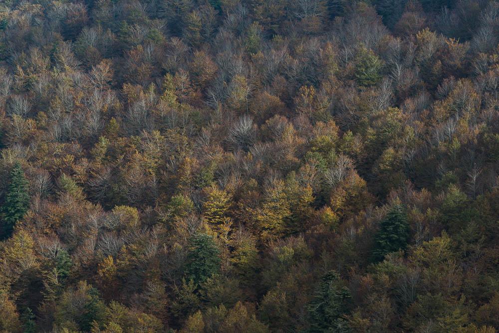 Yuriy Ogarkov Blog Montseny Forest-015.JPG