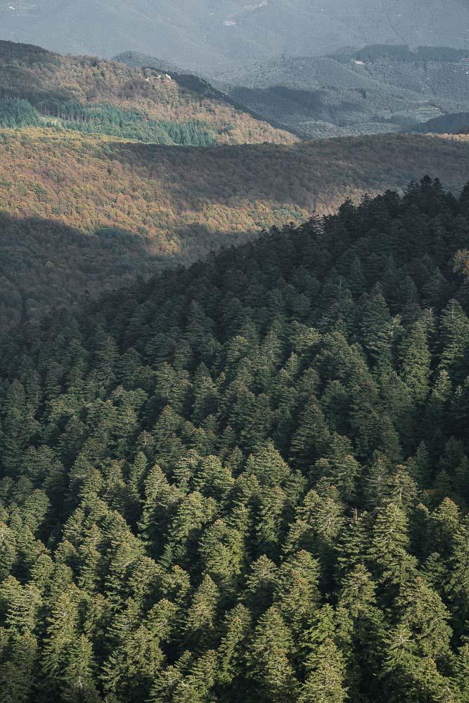 Yuriy Ogarkov Blog Montseny Forest-019.JPG