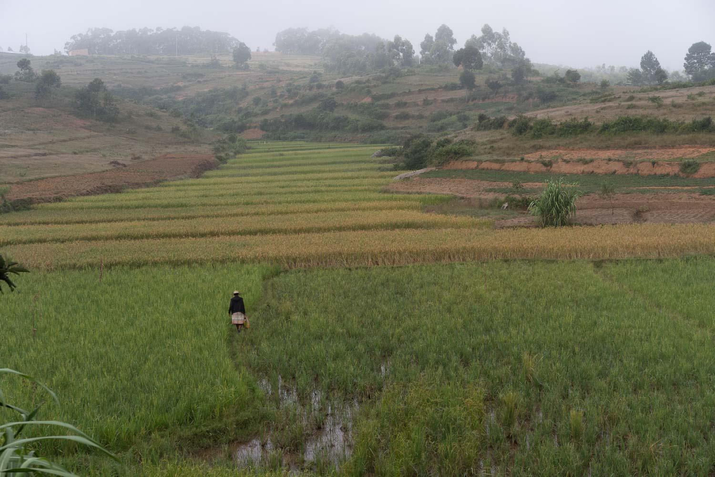 Madagascar Photo by Yuriy Ogarkov - Copyrighted-004.JPG