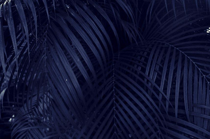 PALMS PARADISE 8-farbiger Druck · Acrylglas auf Alu-Verbund 100 x 66 cm  Preis auf Anfrage