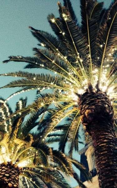 новогодняя пальма  источник