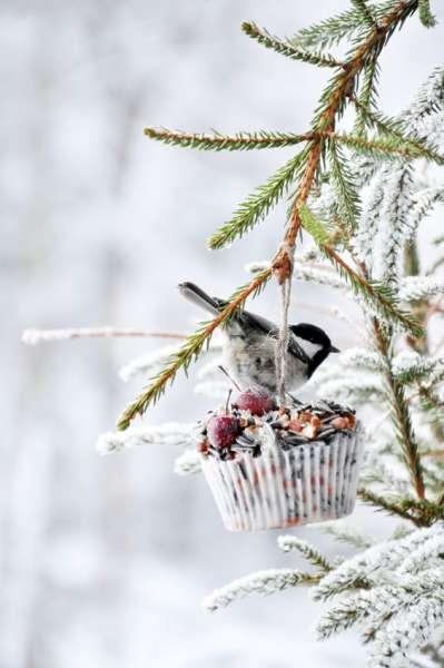 кормушка для птиц своими руками 11.jpg